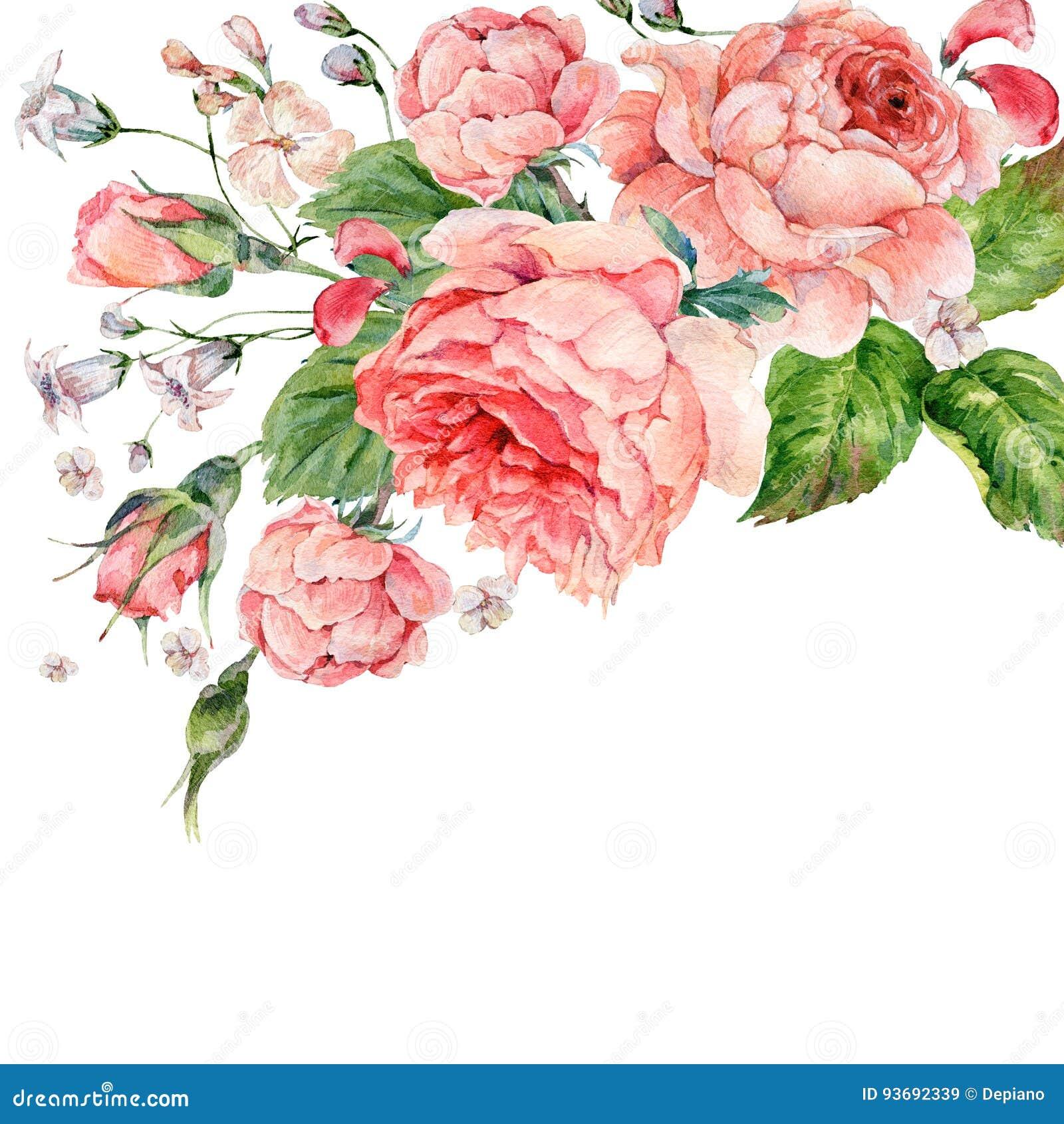 Rose d annata di inglese di rosa dell acquerello