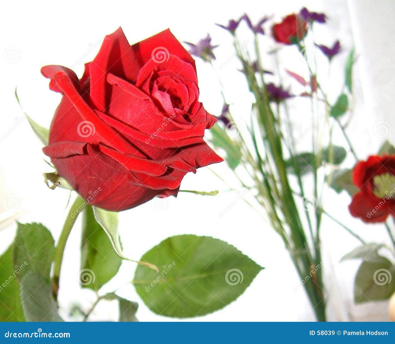 Download Rose de l'amour image stock. Image du rouge, rose, abstrait - 58039