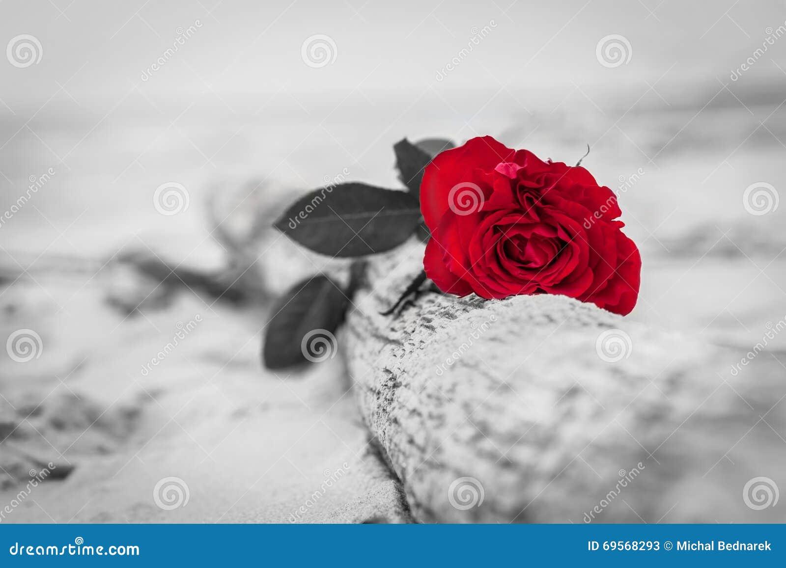 Rose de rouge sur la plage Couleur contre noir et blanc Amour, romance, concepts mélancoliques