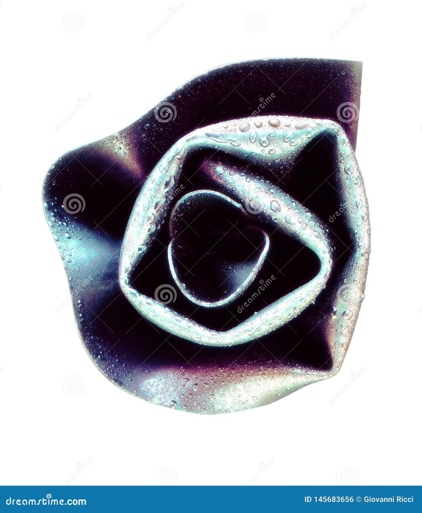 Rose deckte mit Tau ab