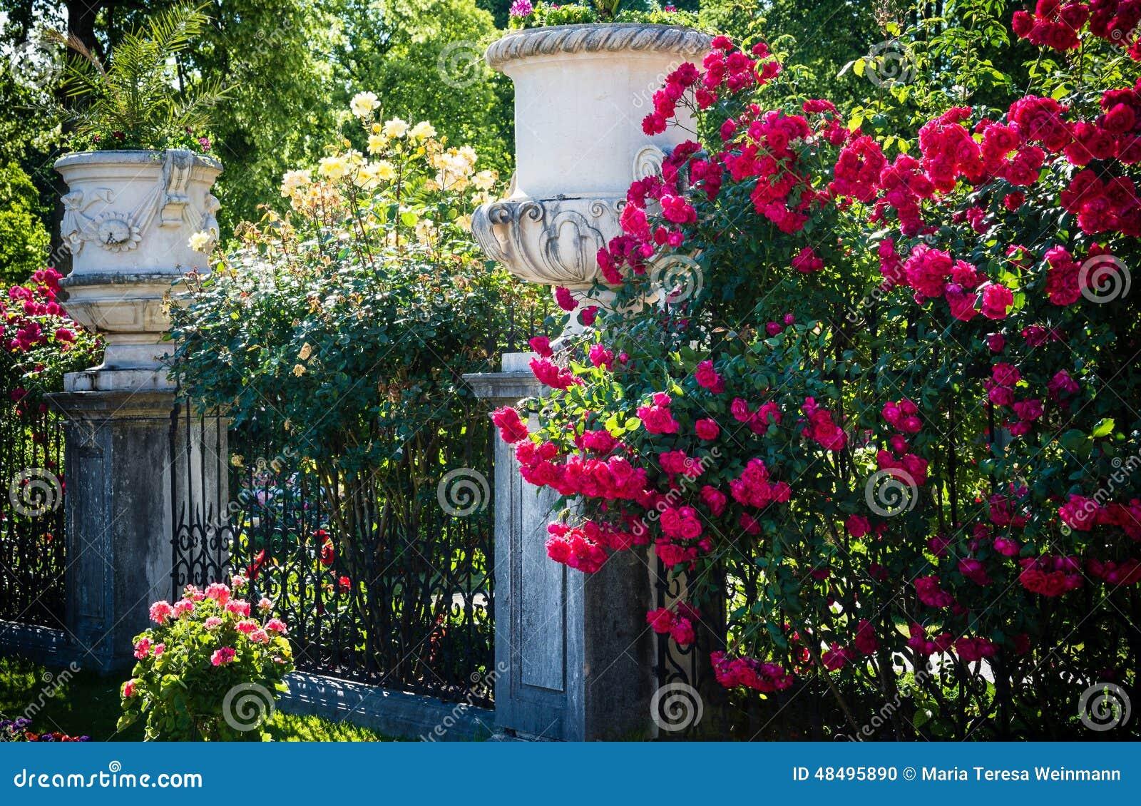 Rose di estate