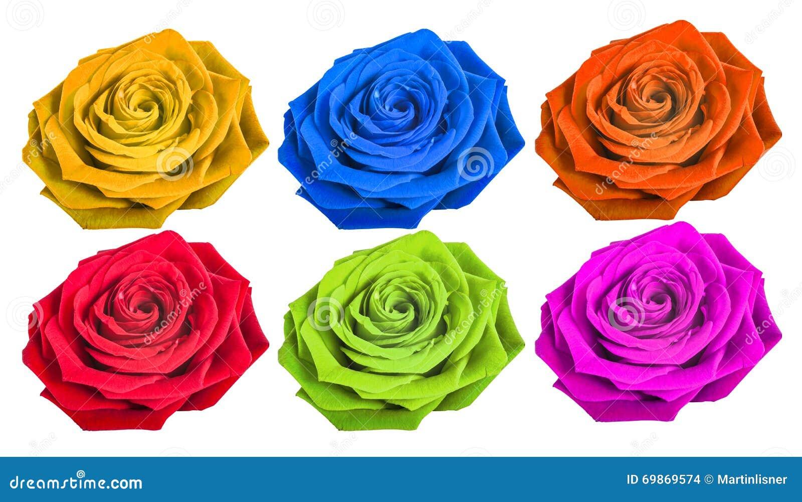 Rose Differente De Couleur D Isolement Sur Le Fond Blanc Photo Stock
