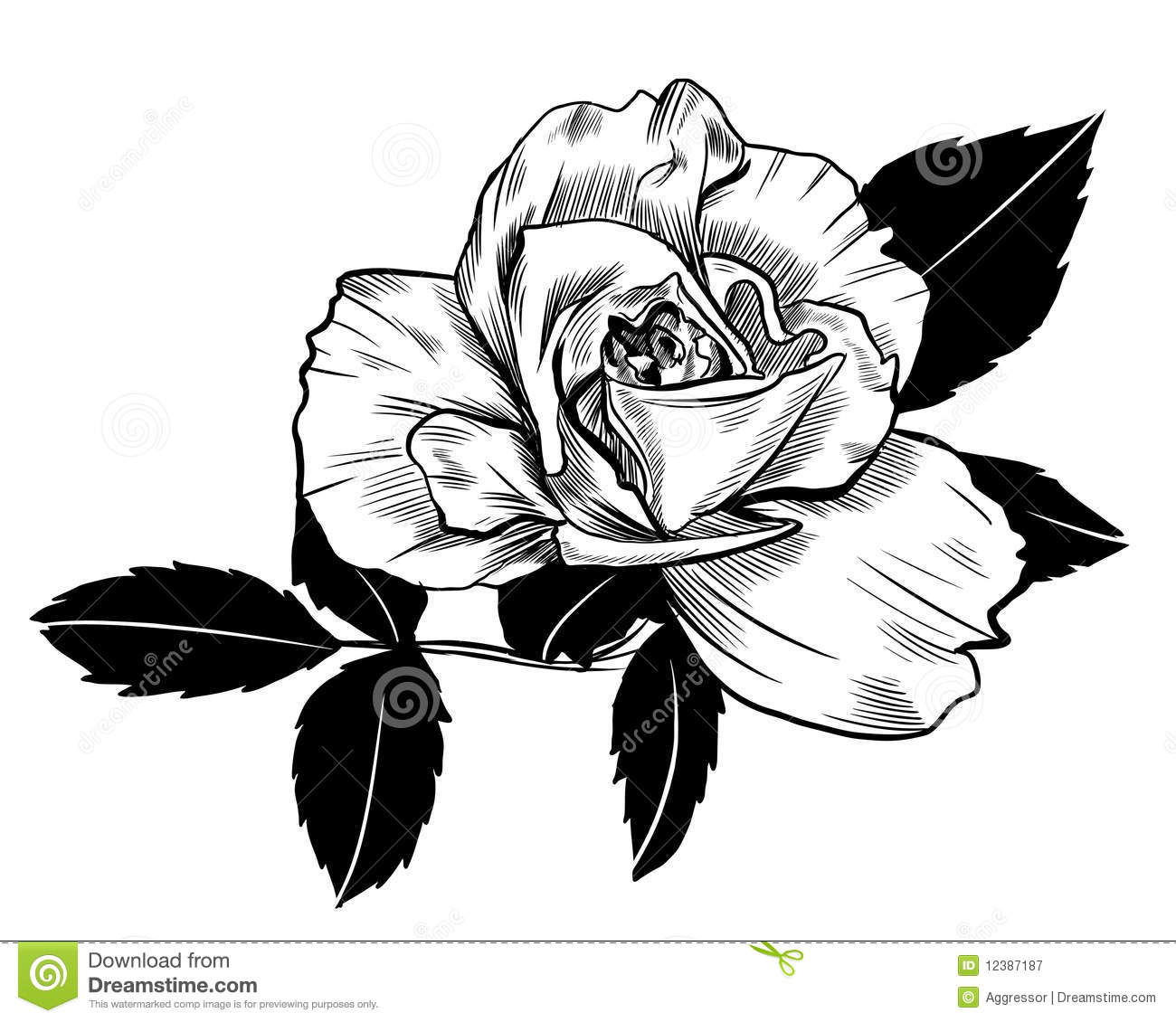 Rose Drawing Royalty Free Stock Photography - Image: 12387187