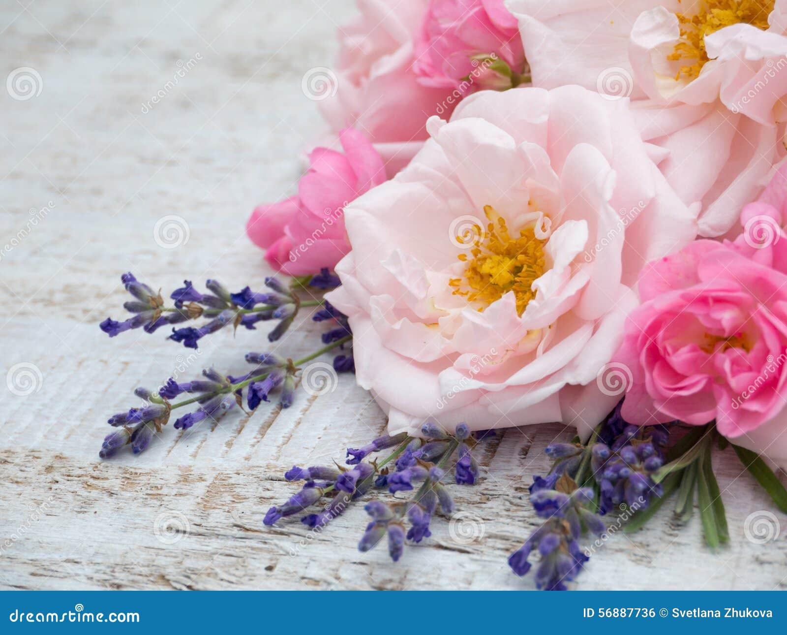 Rose e mazzo pallidi e luminosi della lavanda della Provenza