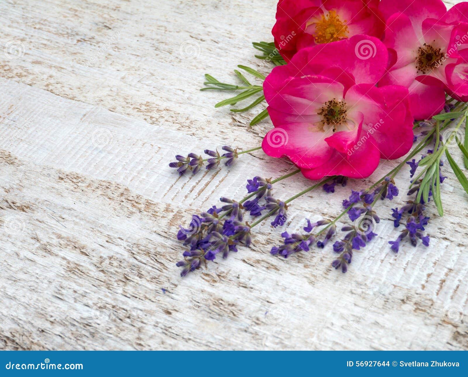 Rose e mazzo rosa luminosi della lavanda della Provenza