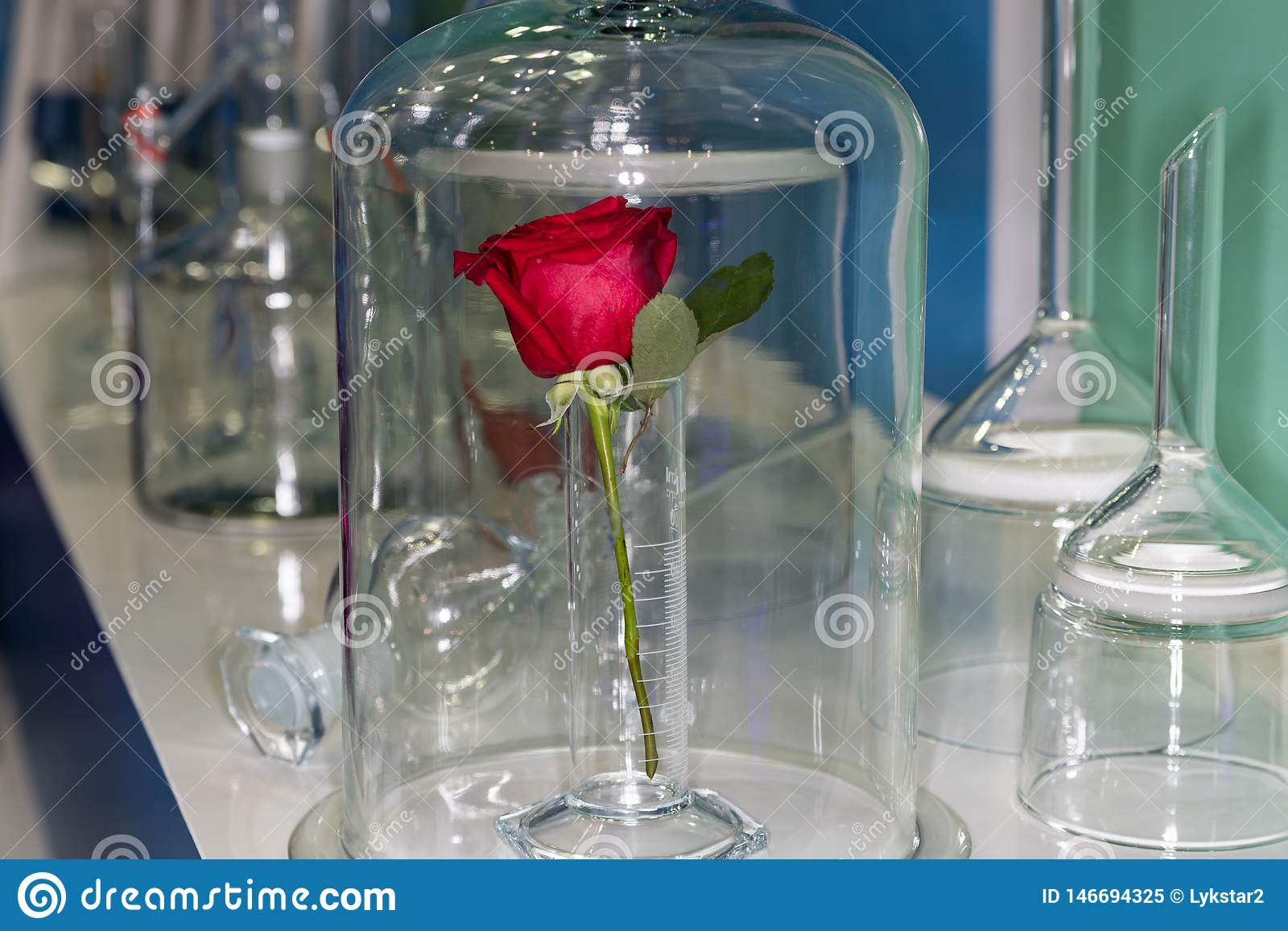 Rose en el laboratorio
