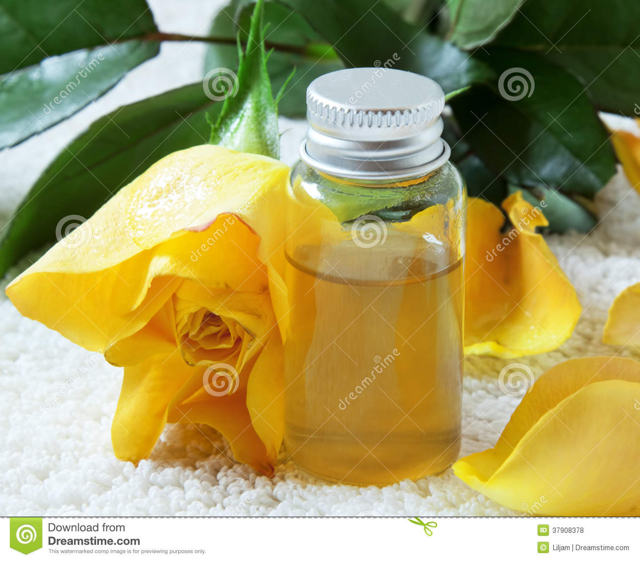 Rose essential oil royalty free stock photos image 37908378 - Rose essential oil business ...