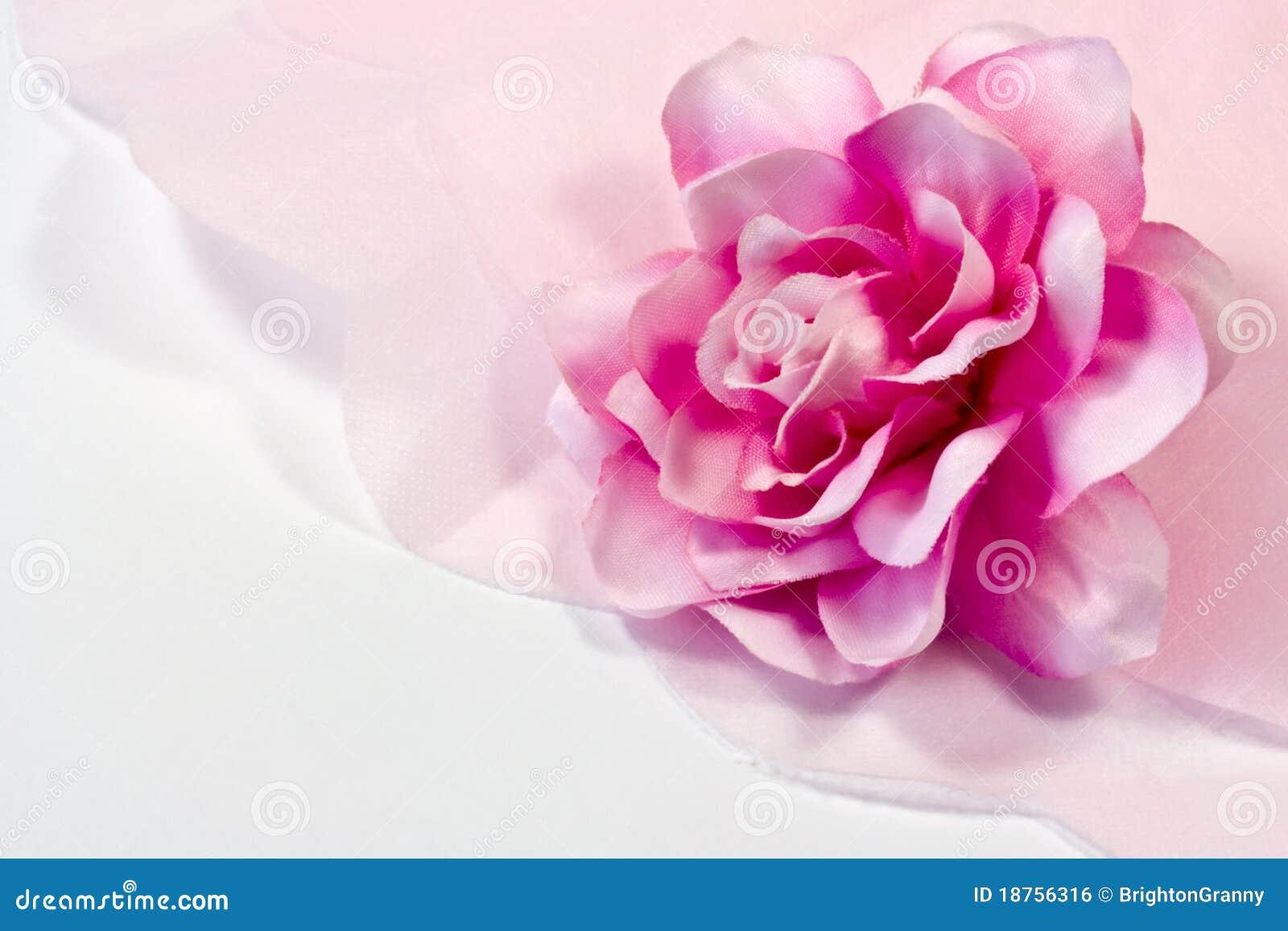 rose et papier de soie de soie photo stock image du p tales closeup 18756316. Black Bedroom Furniture Sets. Home Design Ideas