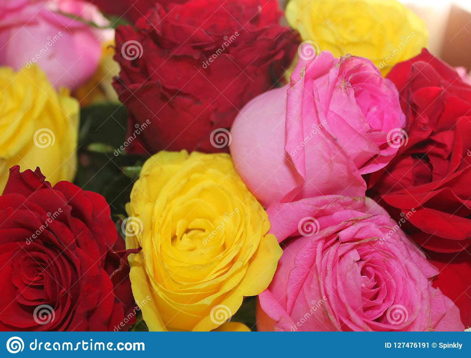 Background Wallpaper Rose Flower Images