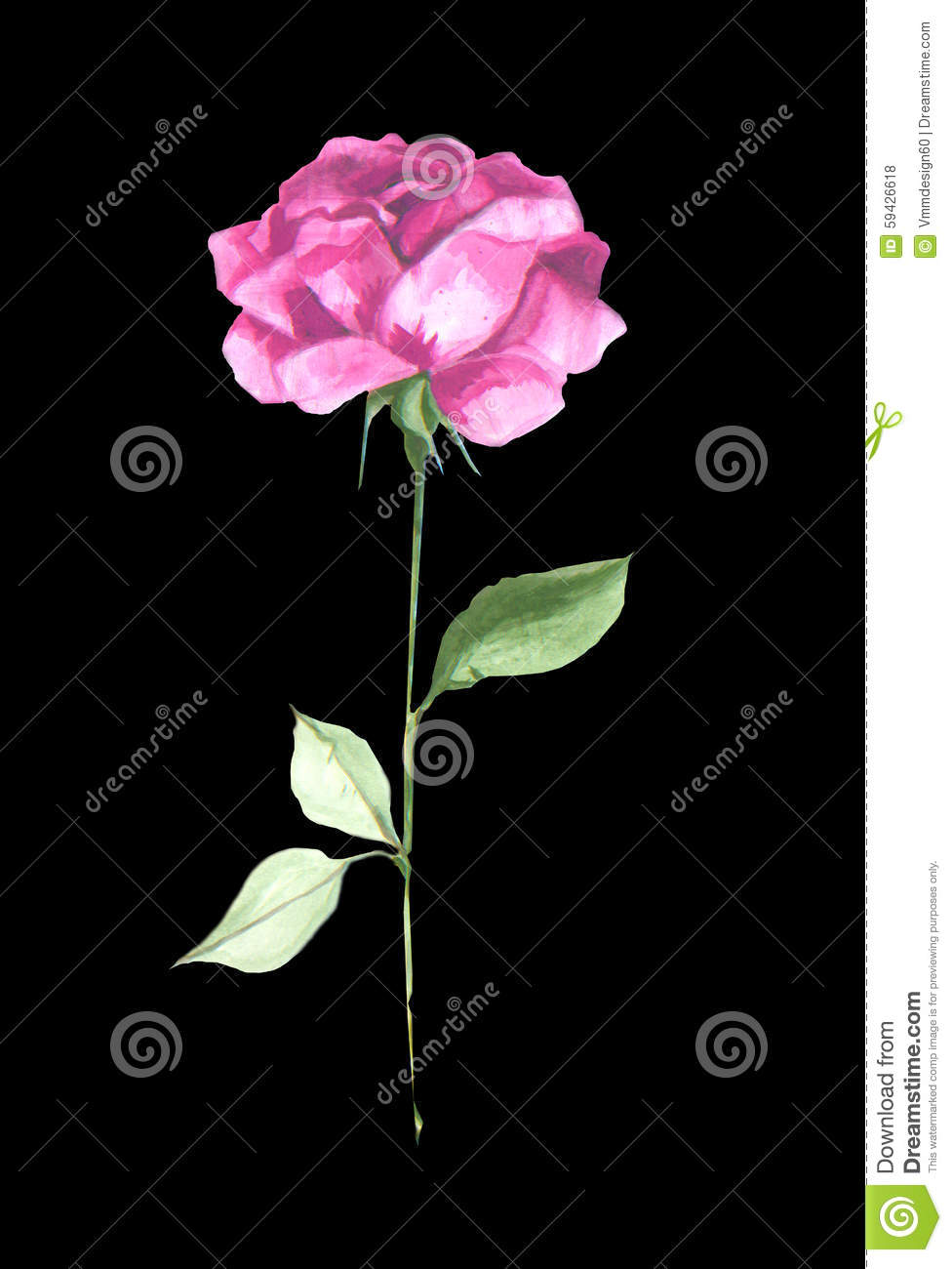 Rose Flower Beautiful Long Stem Watercolor On A Black ...