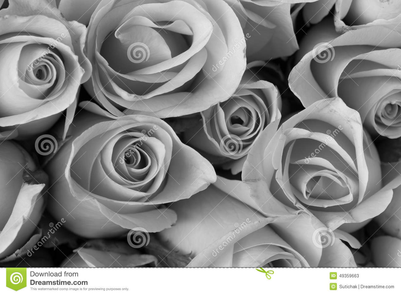 Rose Flower Bouquet Black And White Color Stock Image Image Of