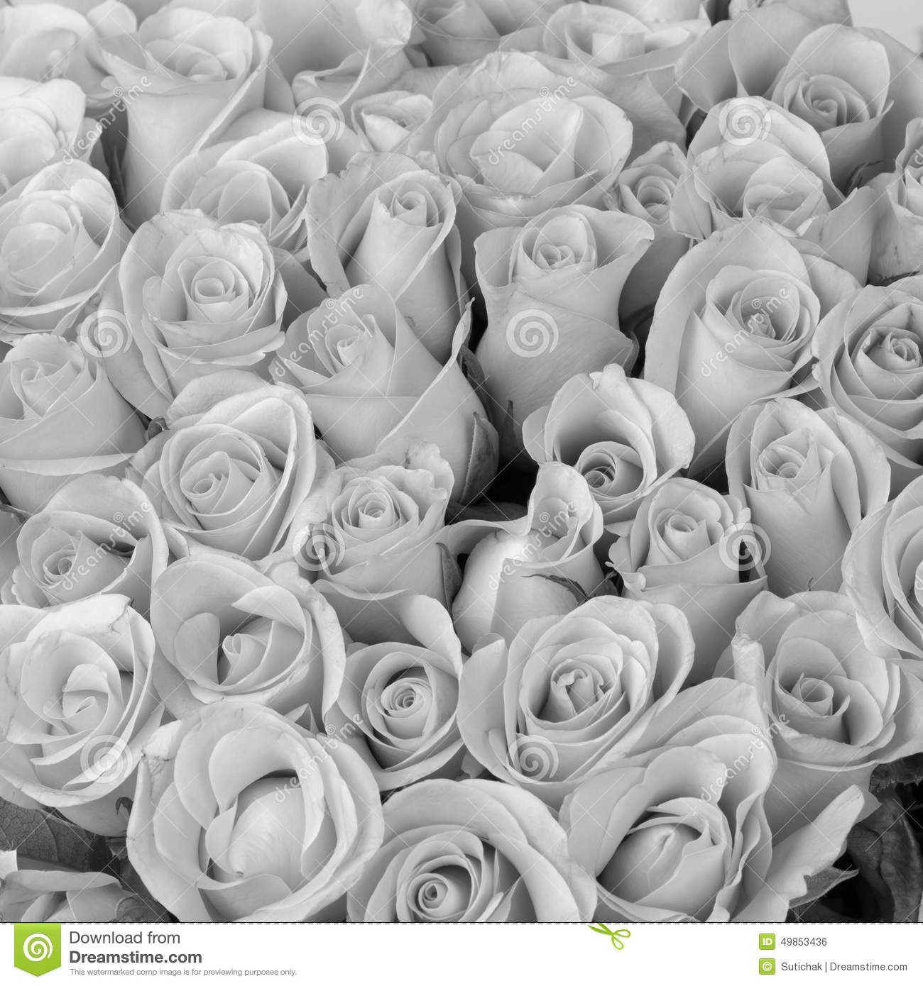 Rose flower bouquet black and white color stock photo image of download comp mightylinksfo