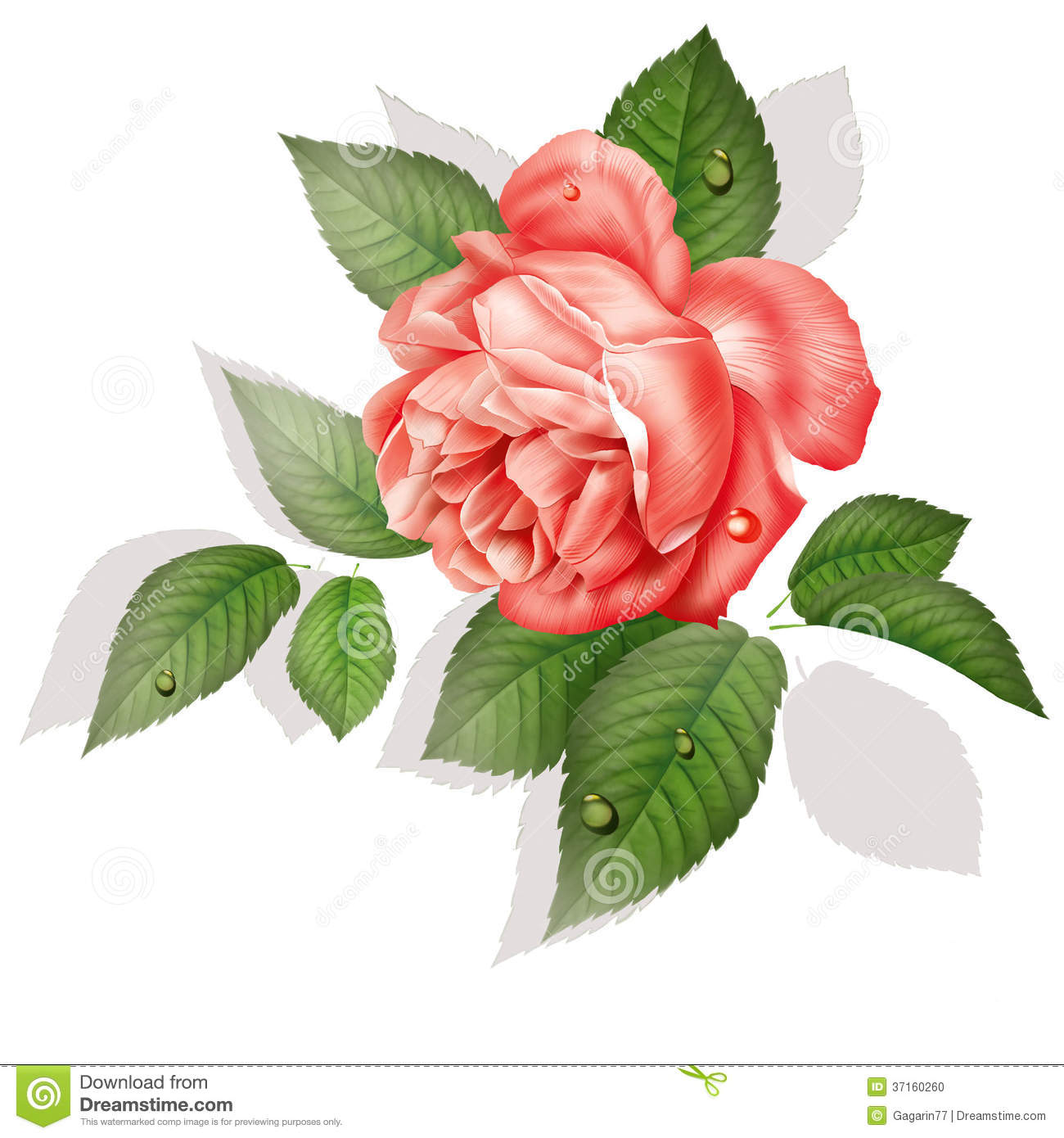 Rose Flower Drawing Painting Stock Photo Image 37160260
