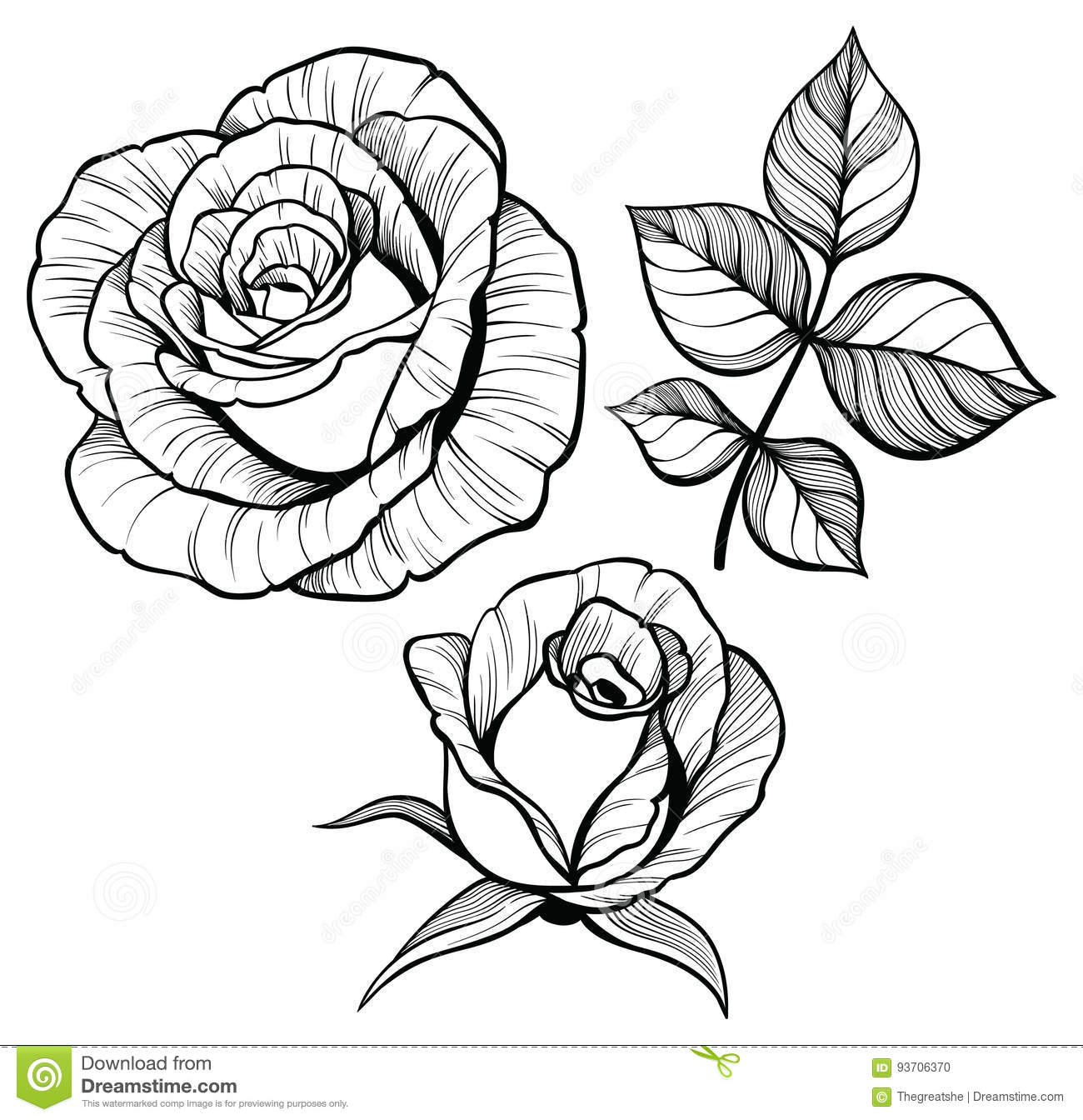Flower Leaf Line Drawing : Rose flower set with a leaf stock vector image