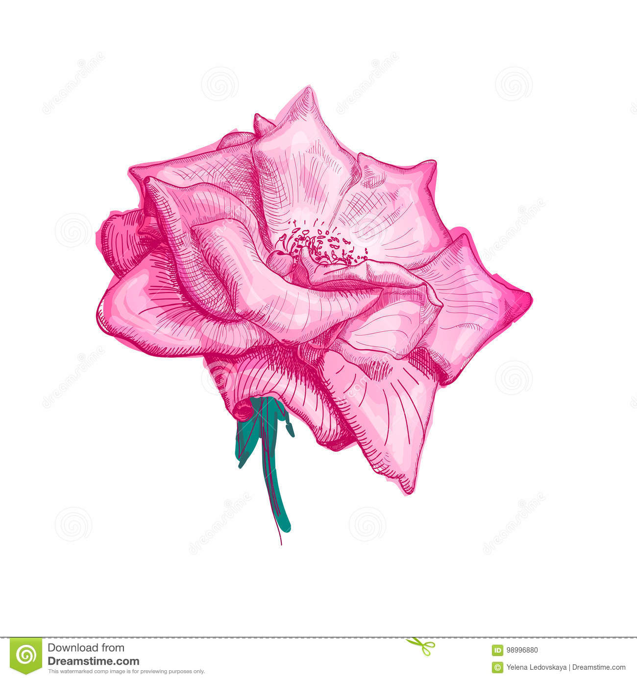 Rose flower sketch stock vector illustration of vector 98996880 hand drawn beautiful flower of pink rose on a white background sketch vector illustration izmirmasajfo
