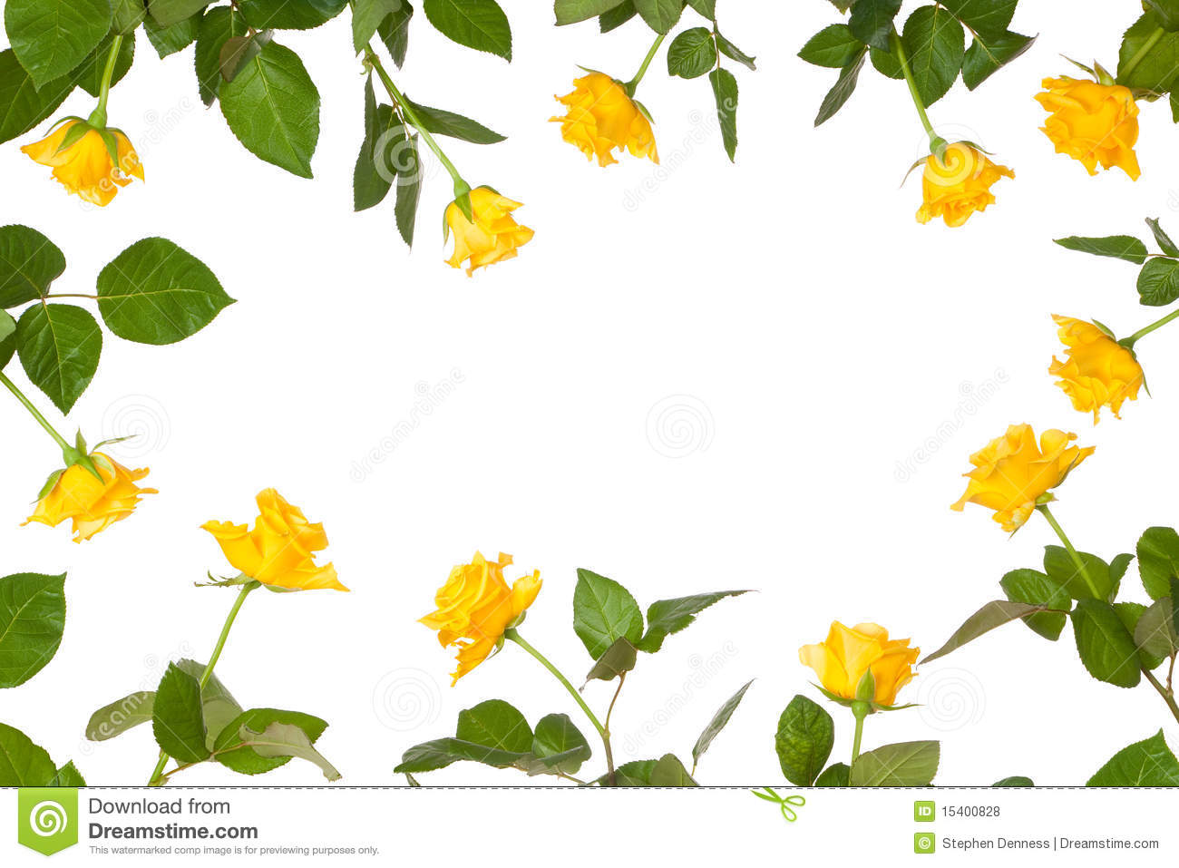 Rose flower stationery border royalty free stock photos image arrangement blank border flower isolated rose dhlflorist Image collections