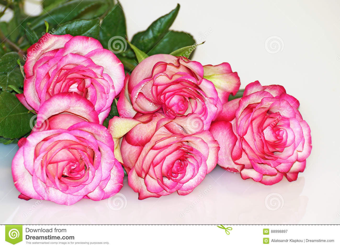Rose flower is a symbol of beauty stock image image of color download rose flower is a symbol of beauty stock image image of color izmirmasajfo