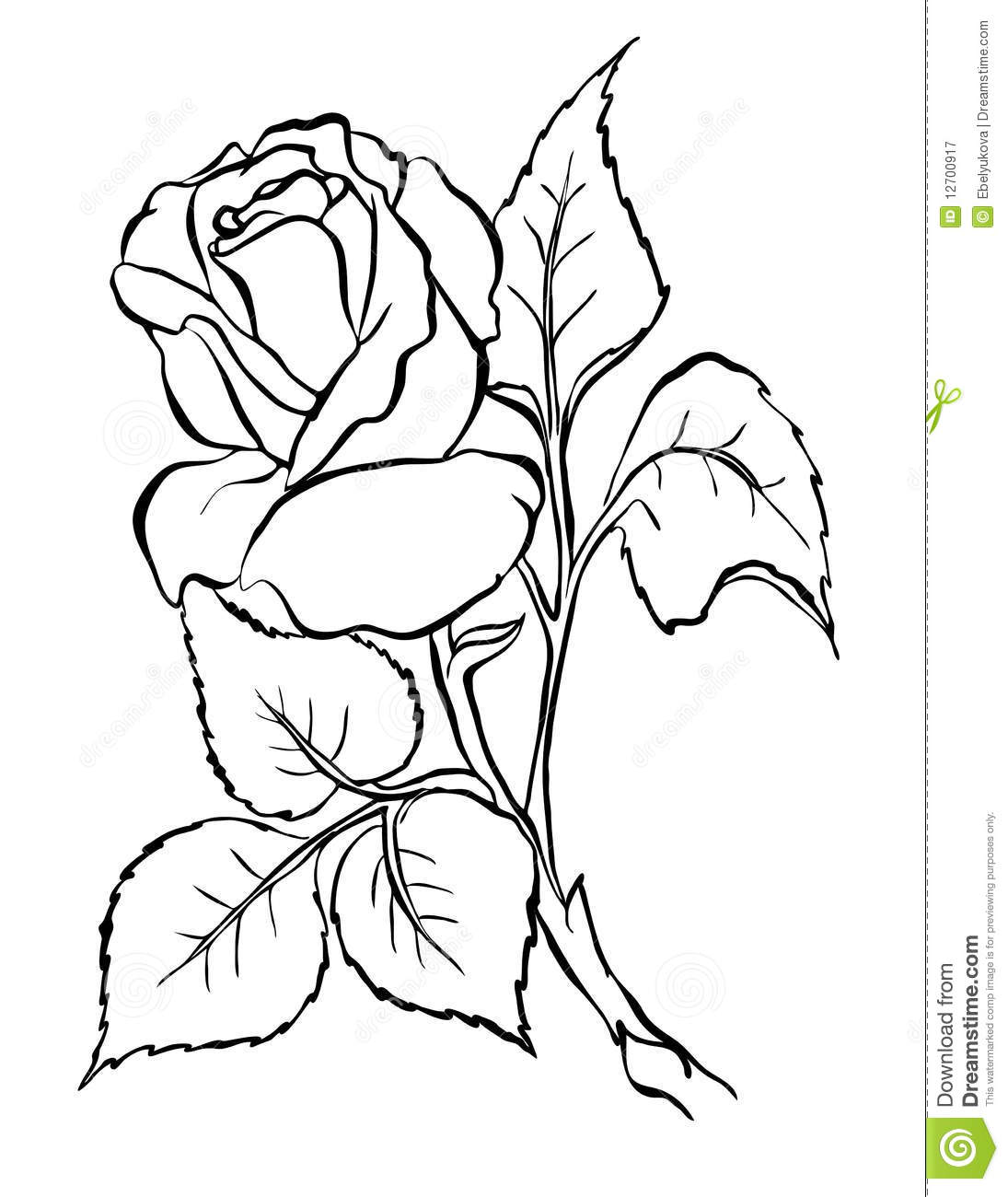 Drawing Lines Freehand : Rose freehand drawing stock vector illustration of