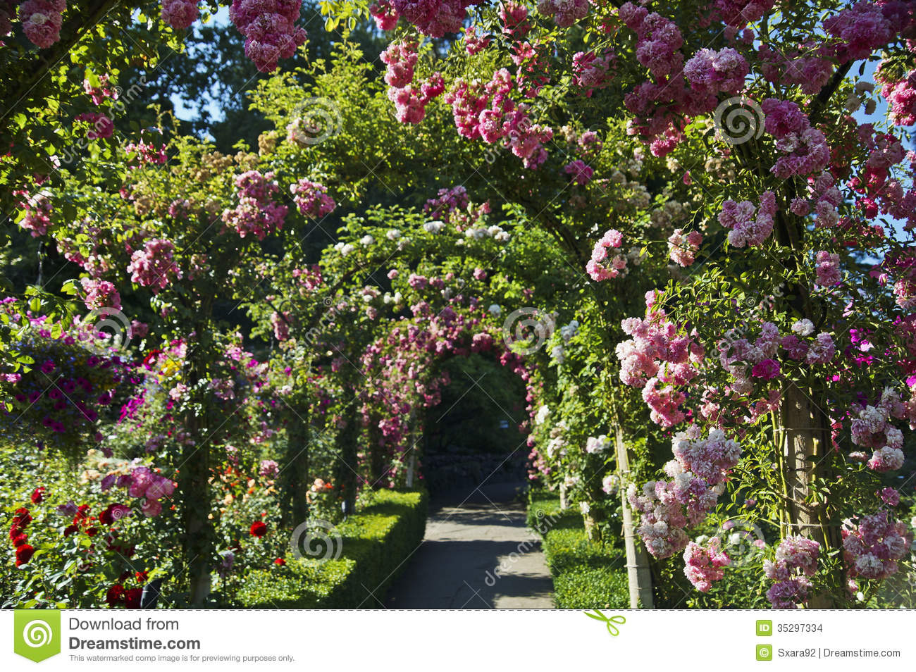 Rose Garden Stock Images Image 35297334