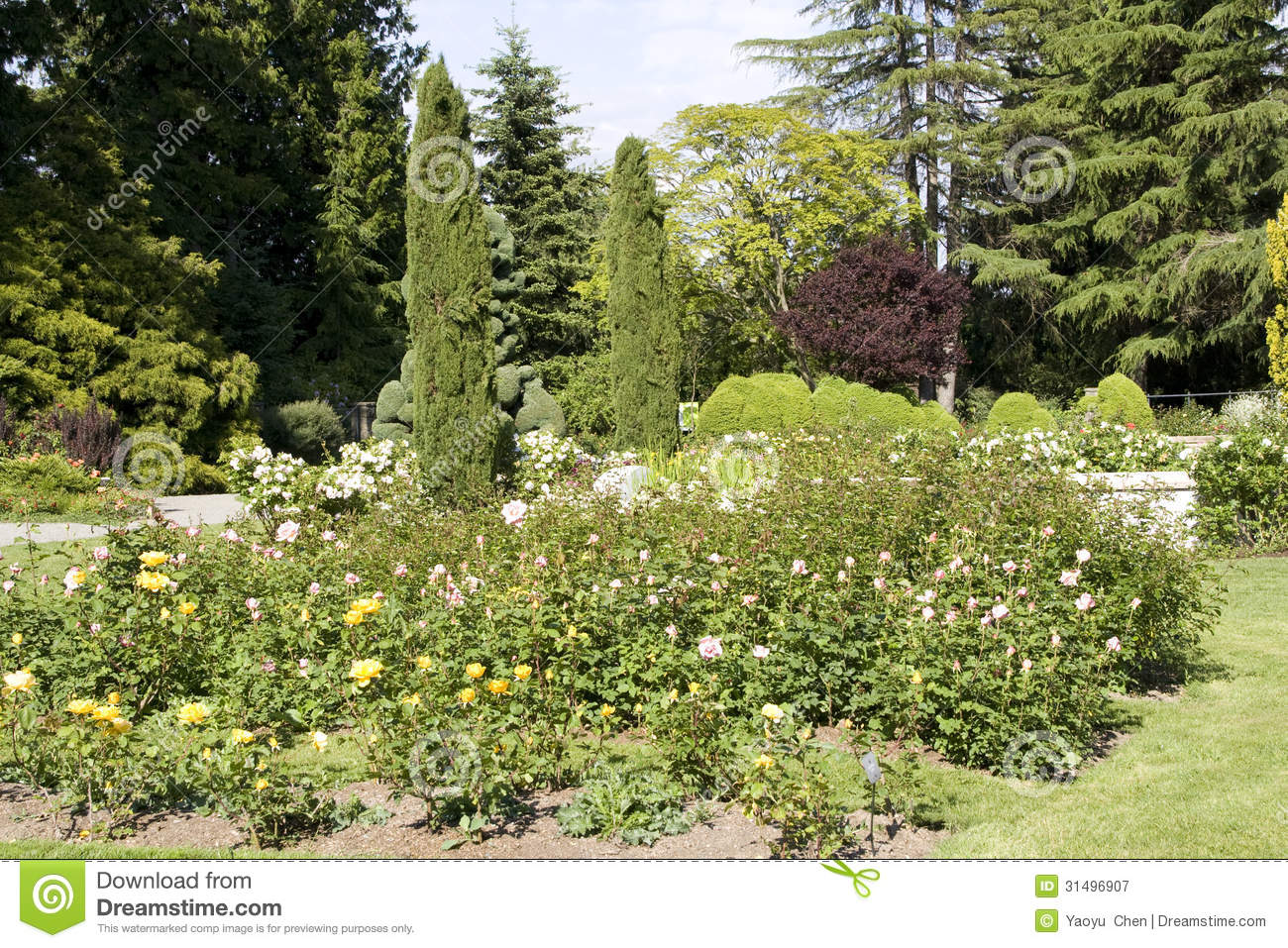 Rose garden royalty free stock photography image 31496907 for Free rose garden designs