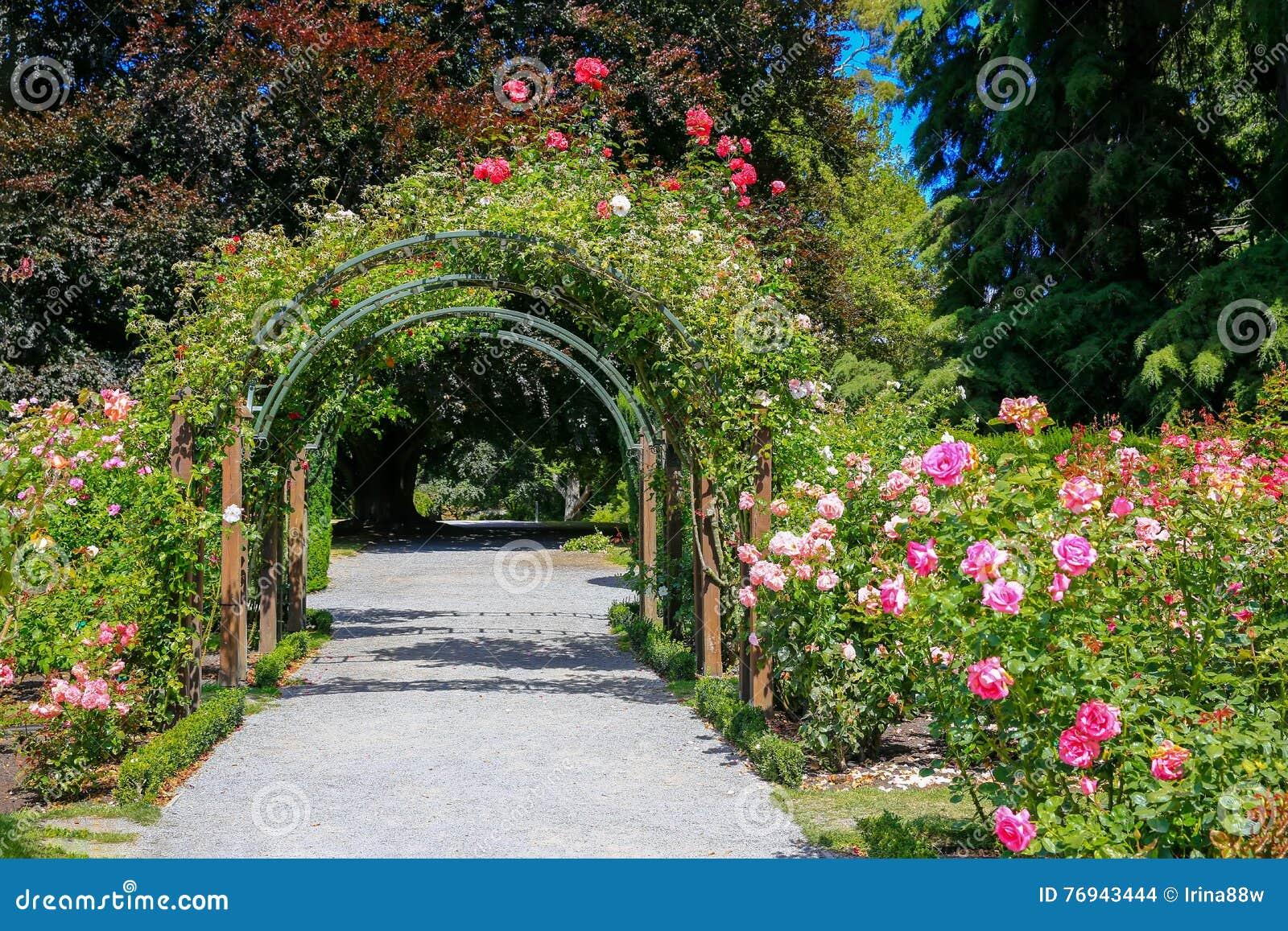 Roses In Garden: Rose Garden In Christchurch Botanic Garden, New Zealand