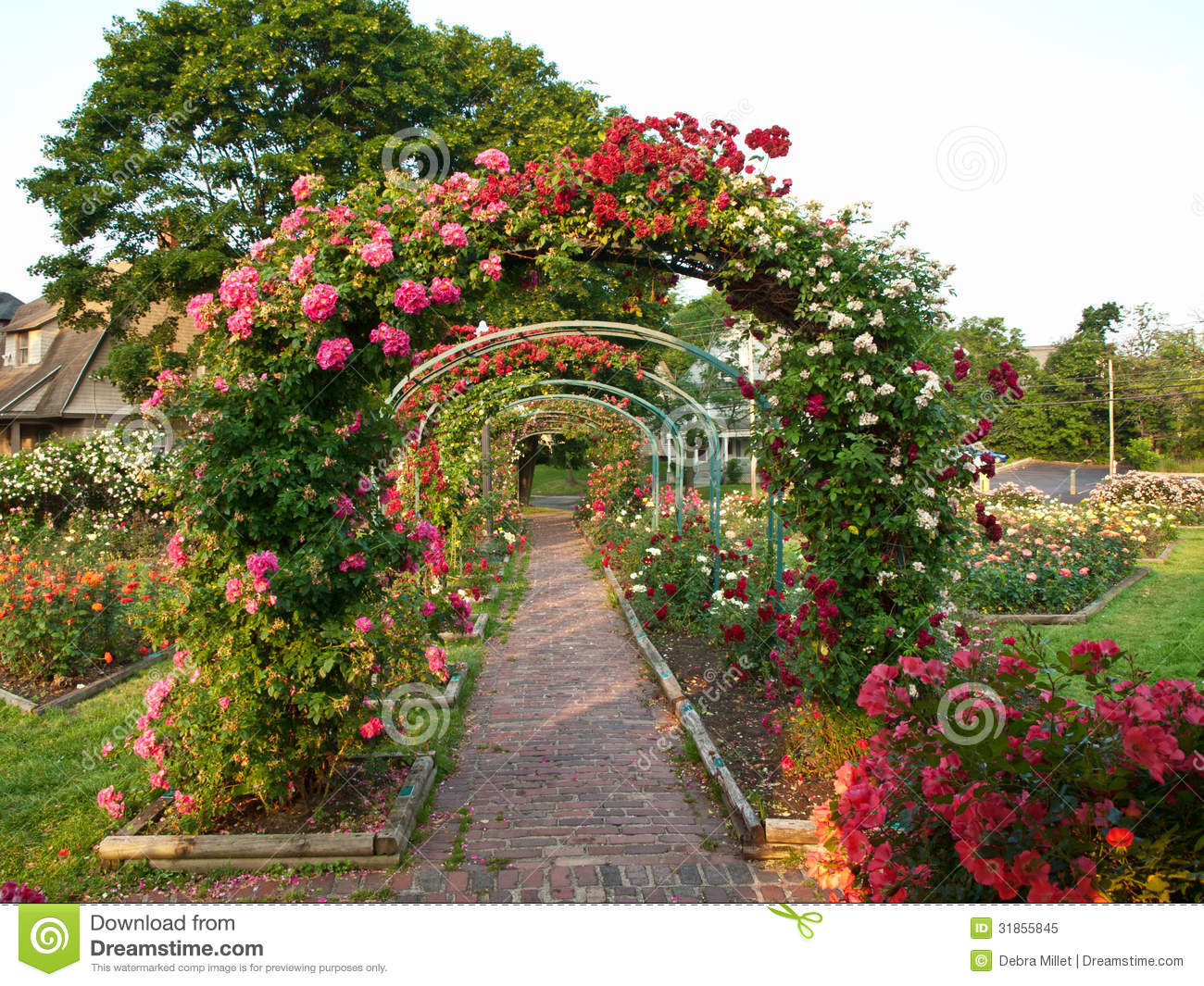 Rose garden royalty free stock photo image 31855845 for Formal rose garden layout