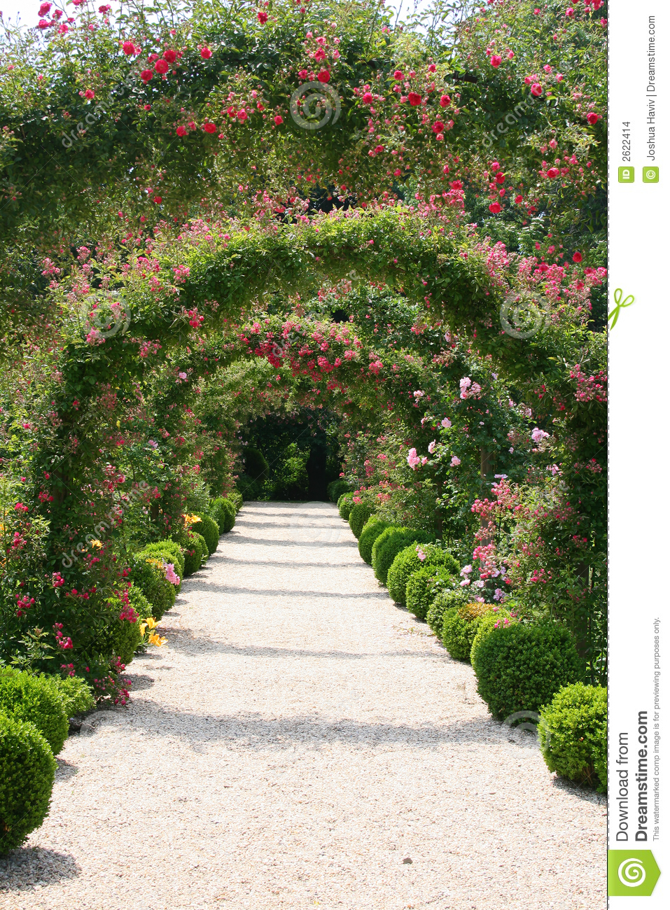 Rose Garden Landscape Stock Photo. Image Of Pink, Pretty