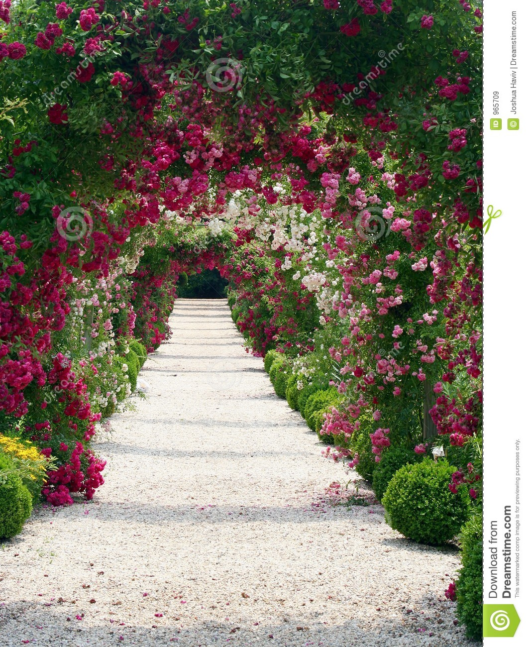 Exceptionnel Rose Garden Landscape. Opening, Background.