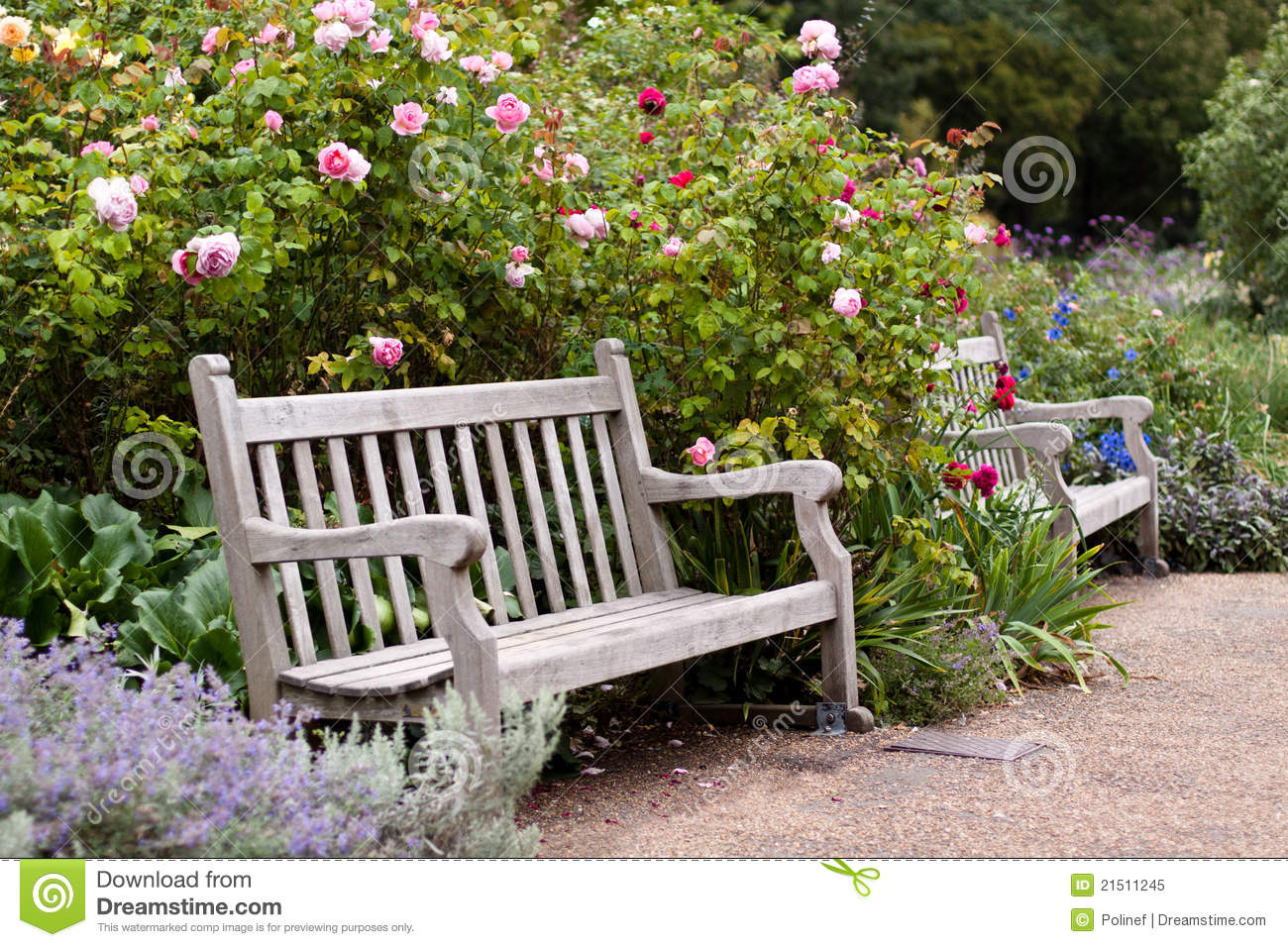 Rose Garden In The Park With Wooden Bench Royalty Free Stock Photo ...