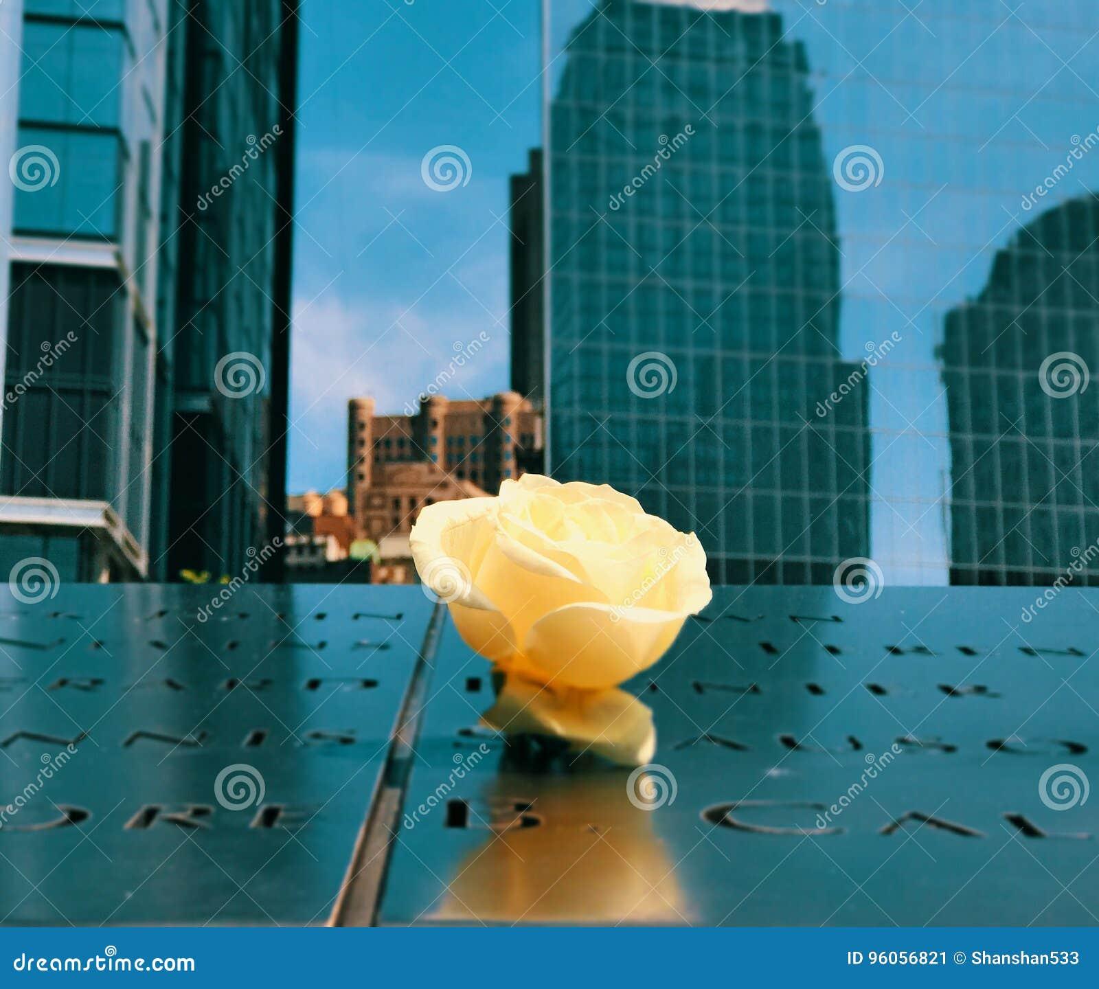 Rose Ground Zero simple