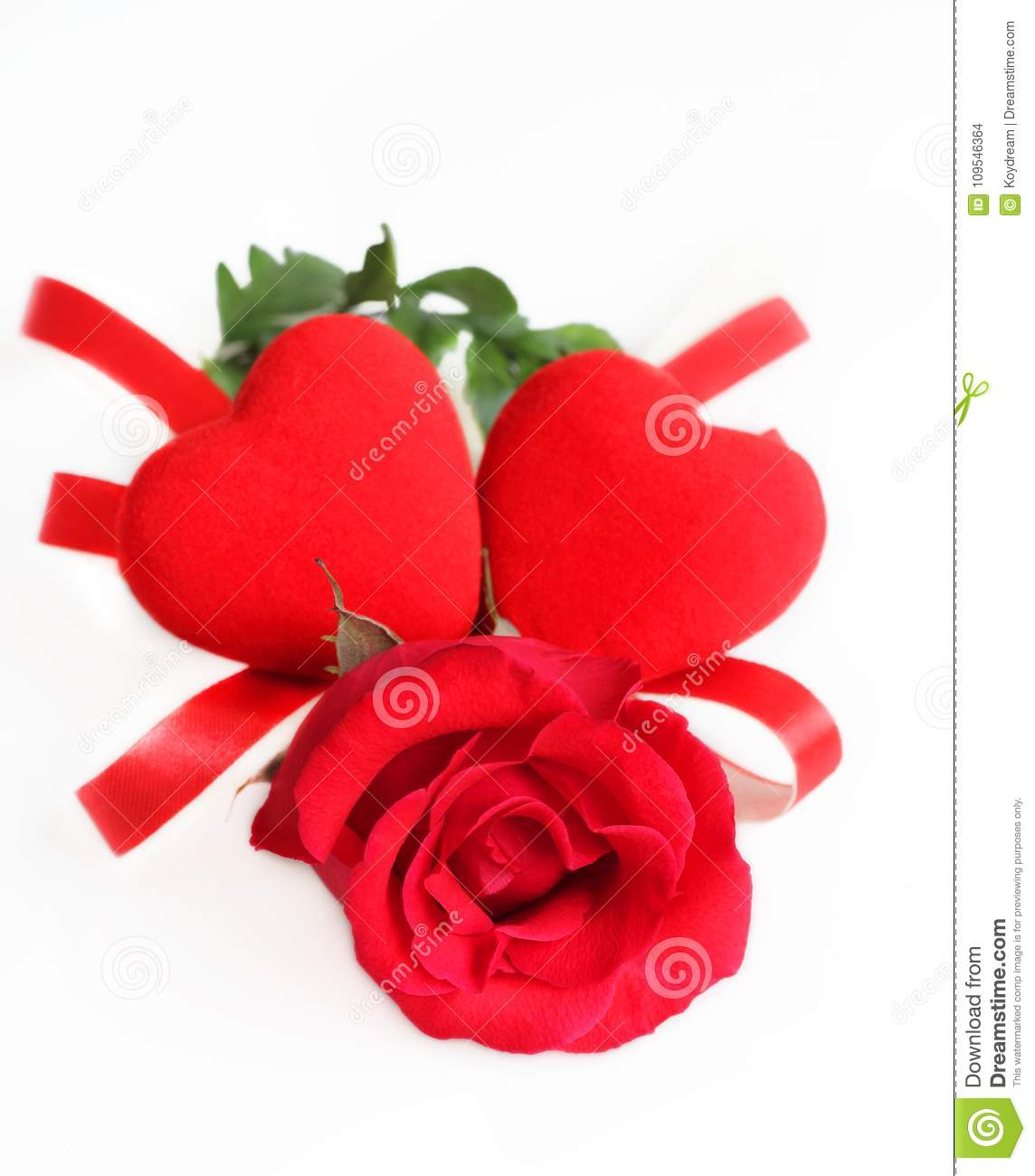 Rose Red Color Flower On White Background. Stock Photo - Image of ...