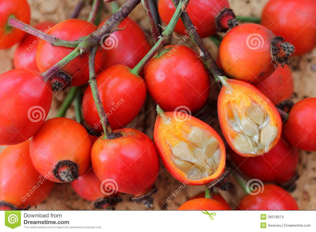 rose hip flowers cut in half stock images image 36518074