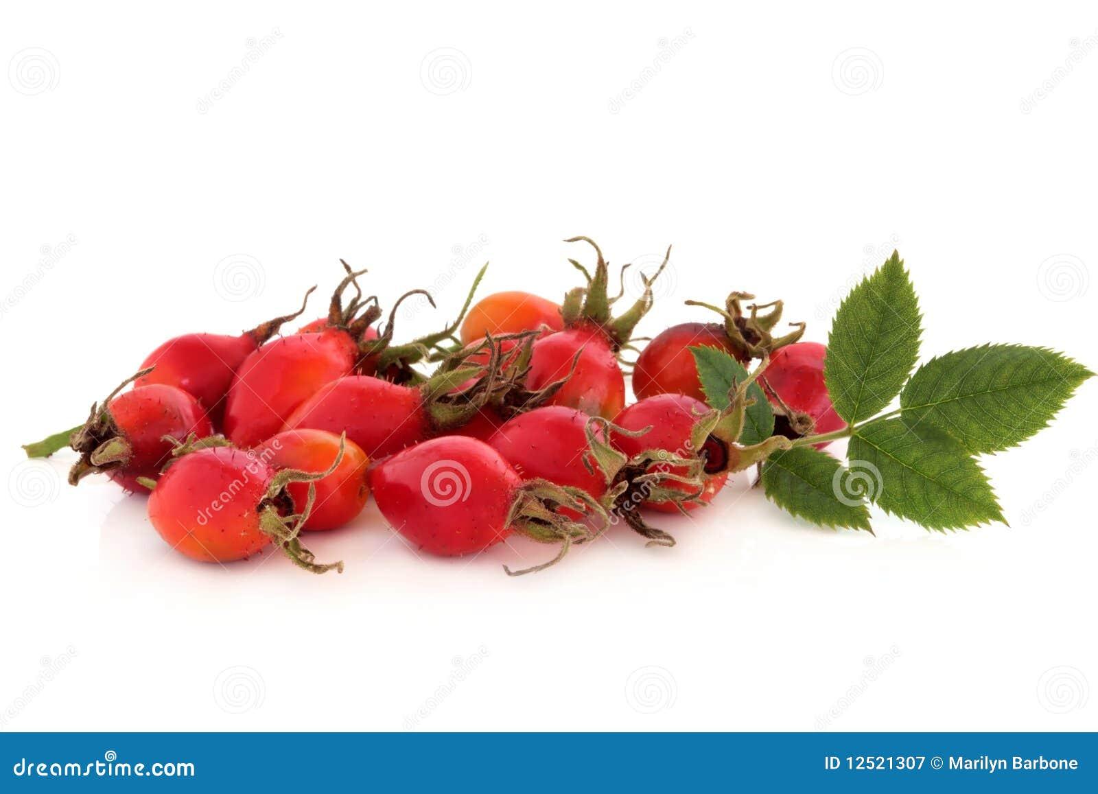 Rose Hip Wild Fruit