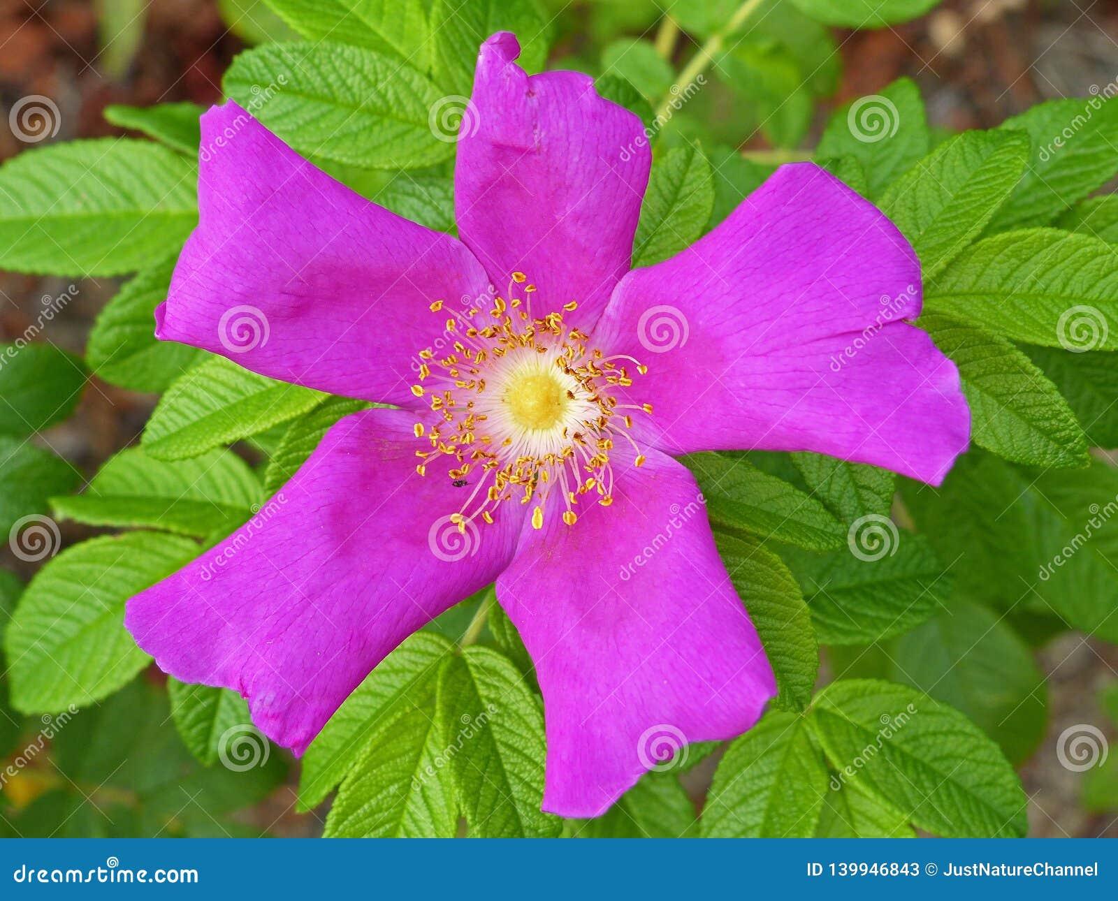 Rose Hips Flower 2