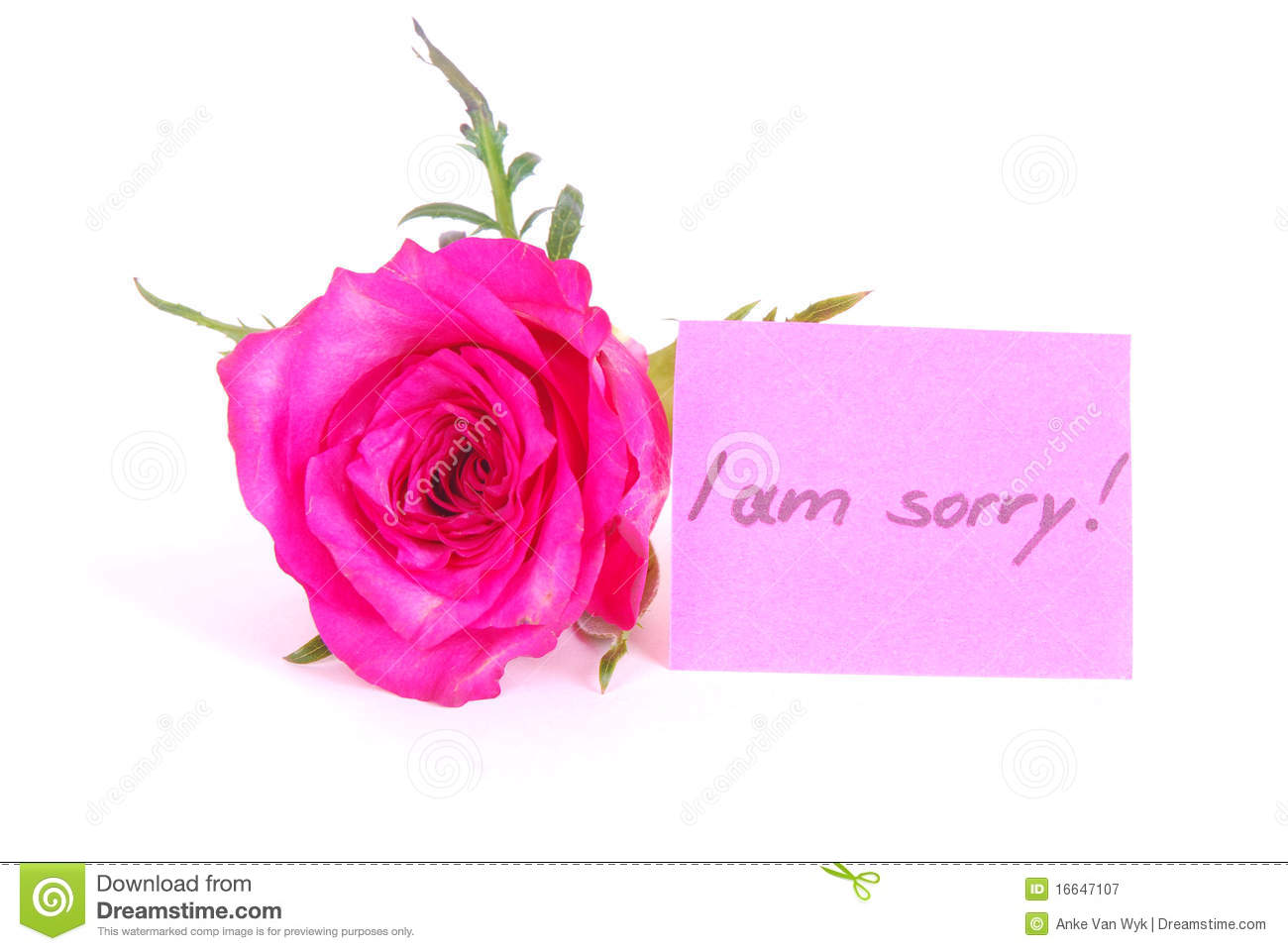 rose with i am sorry note stock image image of written 16647107