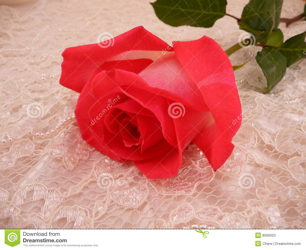 Rose and Lace