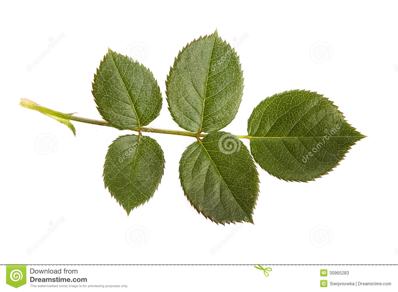 rose leaf stock photos image 30965283 clipart sound bytes clip art sounds for microsoft powerpoint
