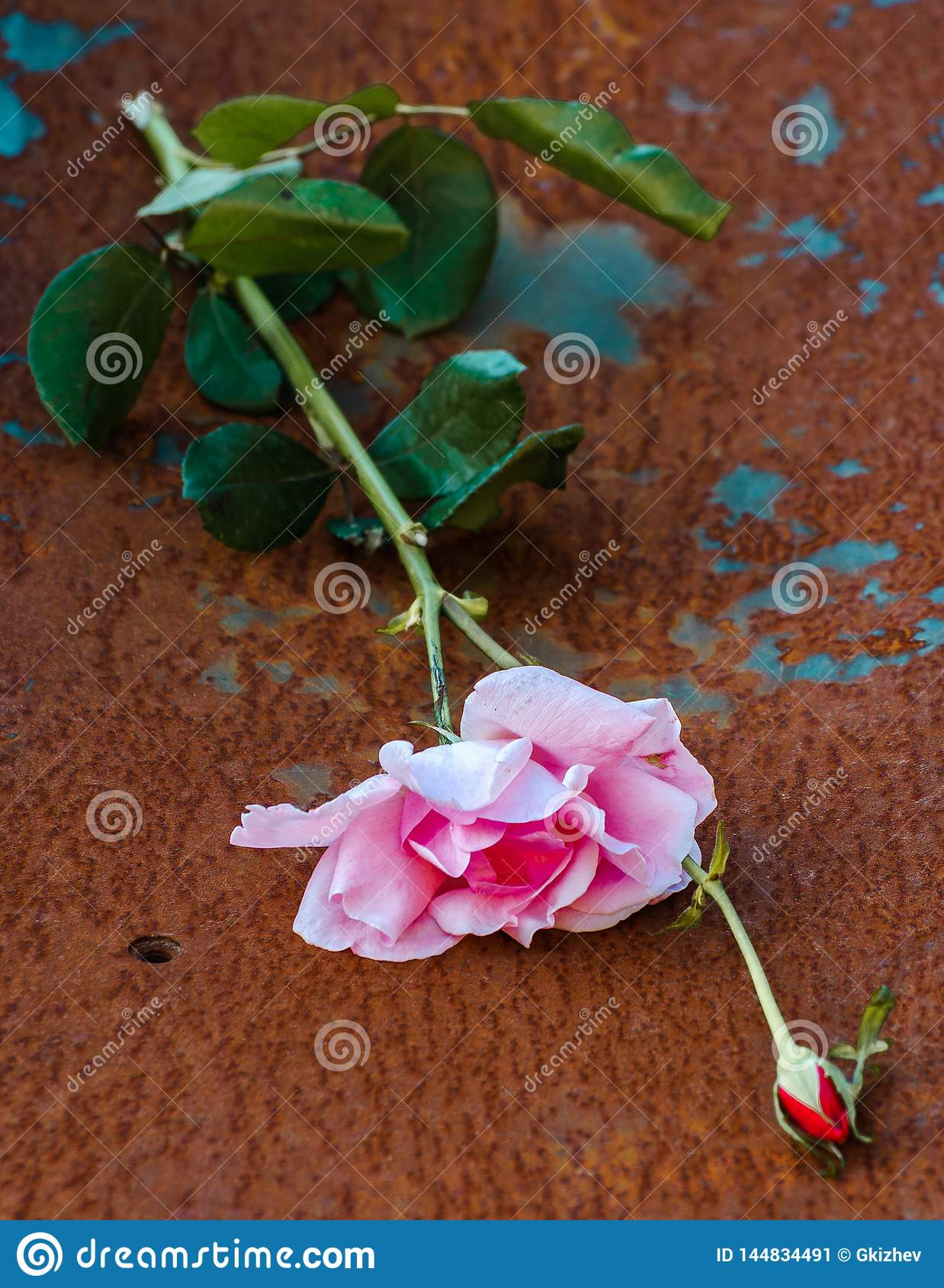 Macro rose with a leaf and rust