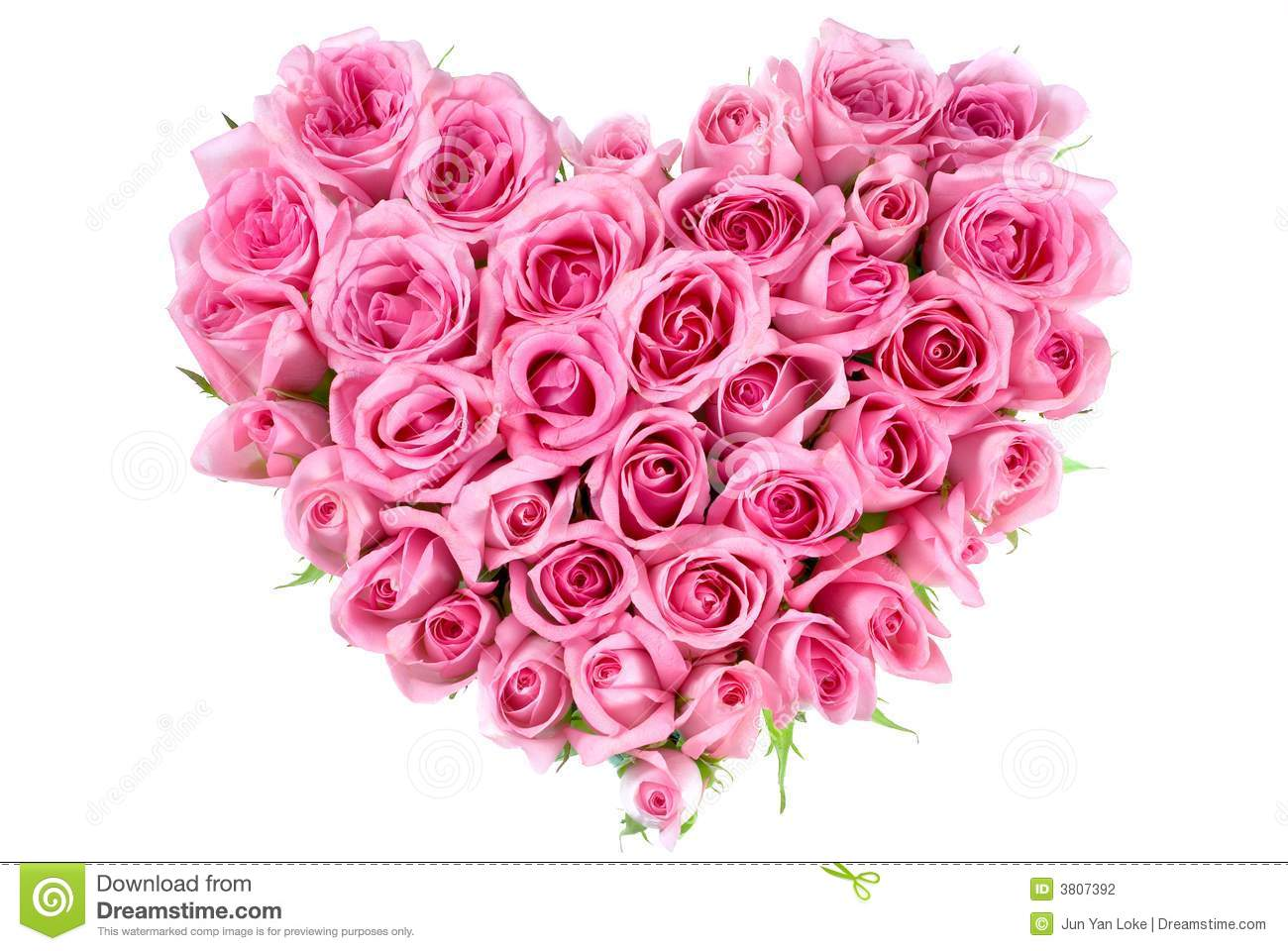 Rose In Love Shape Stock Photography - Image: 3807392