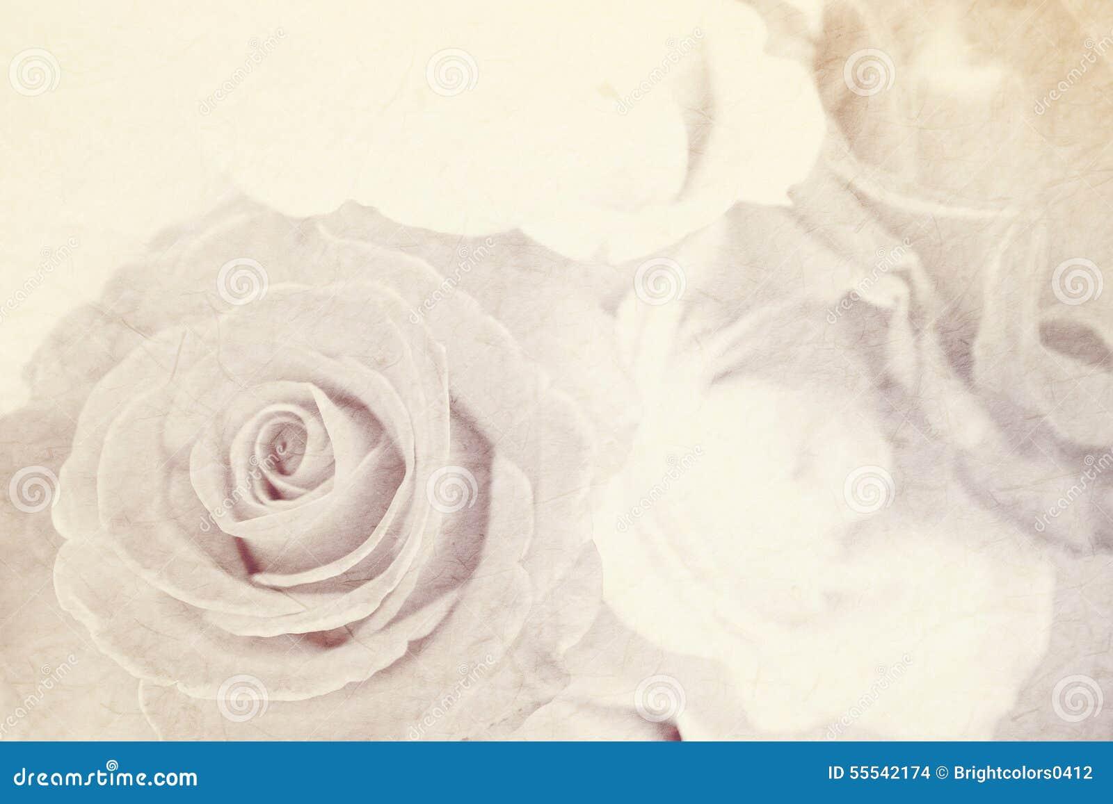 rose molle de couleur sur la texture de papier de m re pour le fond romantique photo stock. Black Bedroom Furniture Sets. Home Design Ideas