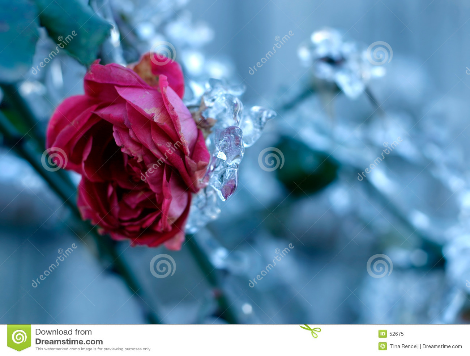 Rose mrożone