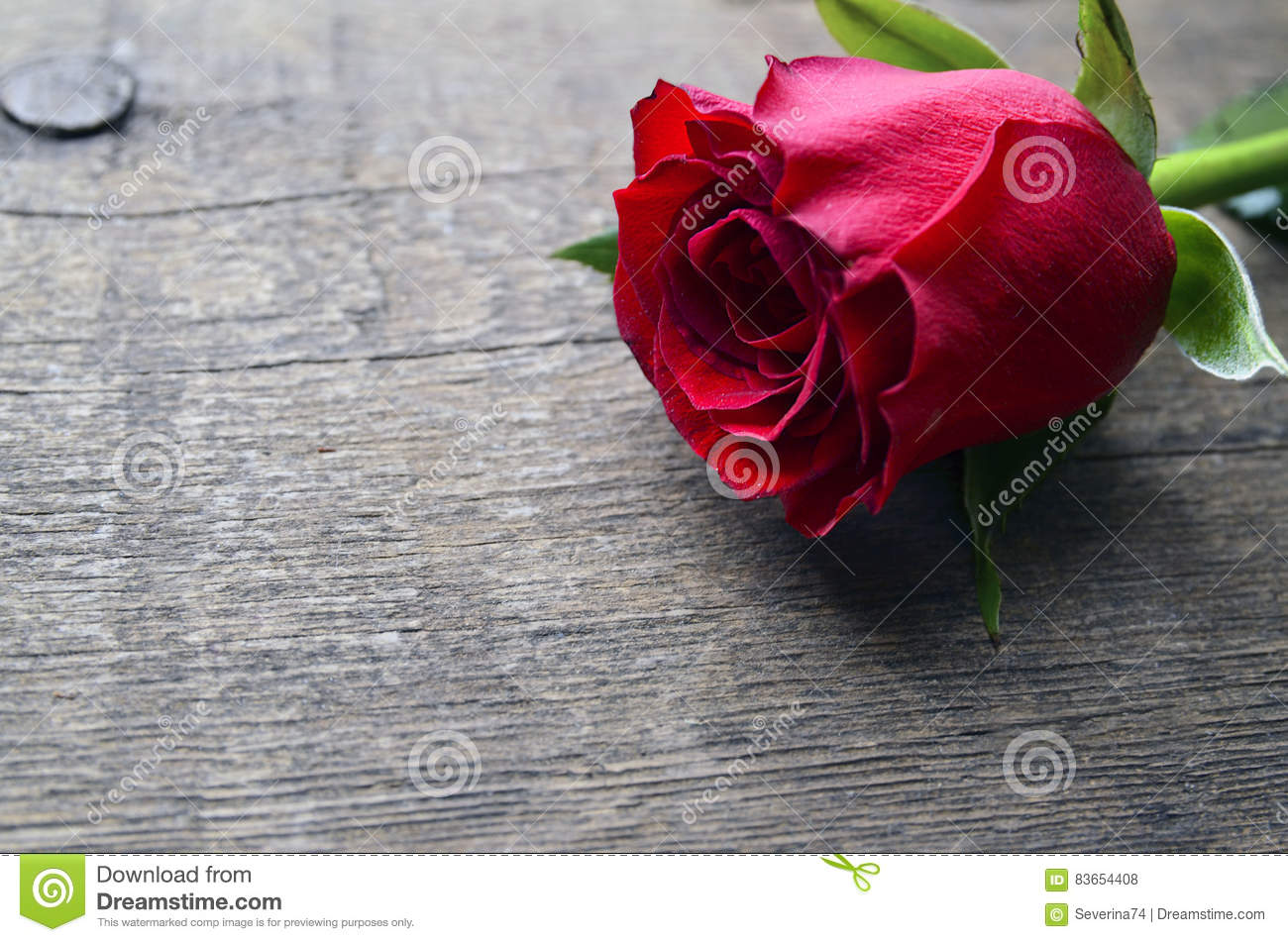 Rose on old wooden background for Valentine`s Day with copy space.Valentine rose.