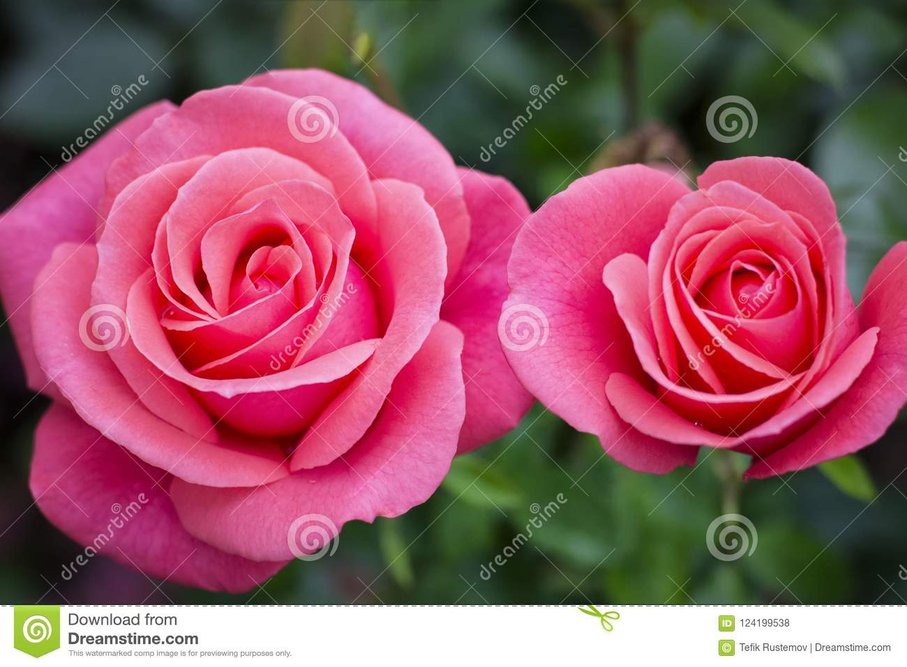 With the beauty of flowers and the variety of colors shapes and download with the beauty of flowers and the variety of colors shapes and fragrances izmirmasajfo