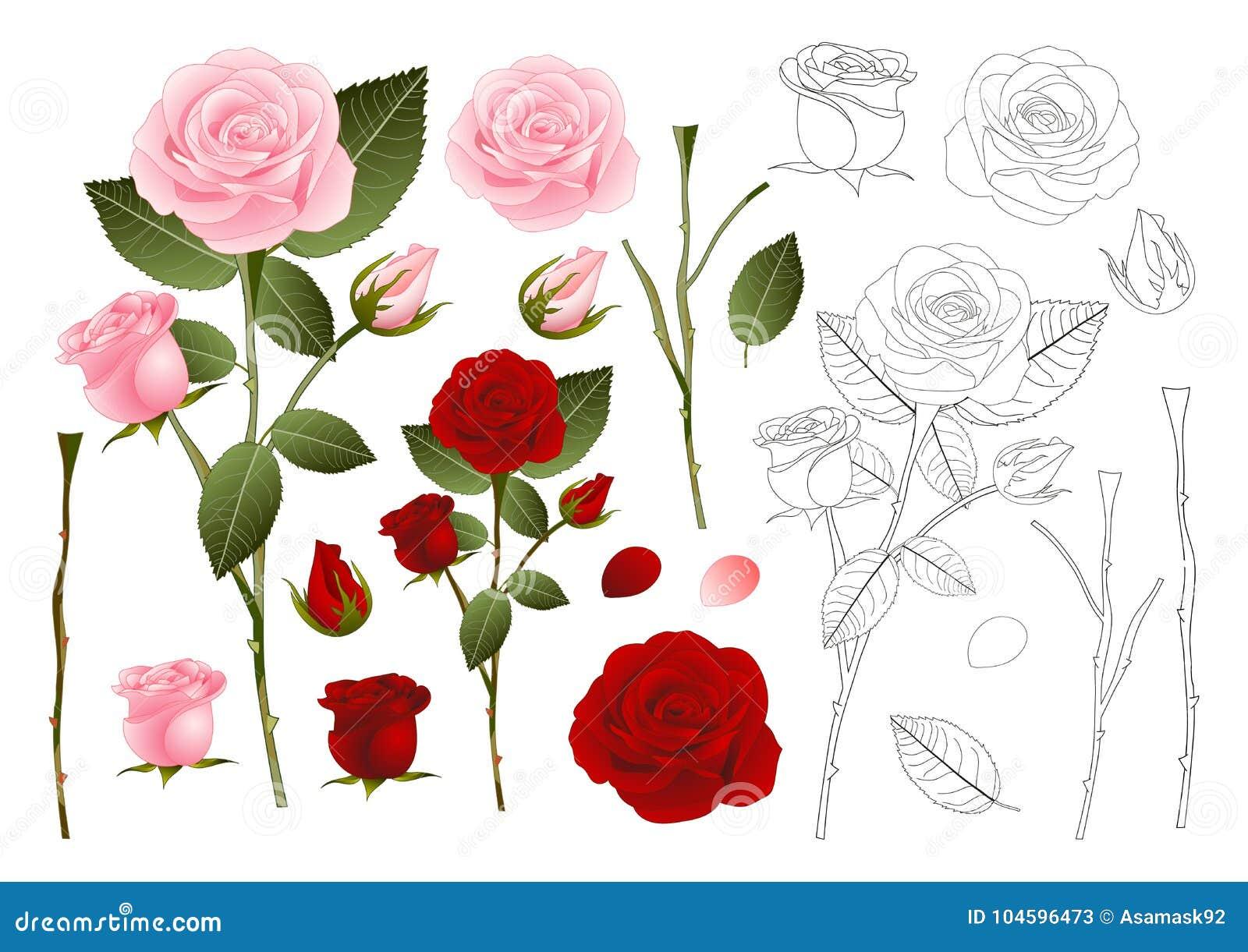Rose Outline hermosa - Rosa rosados y rojos Día de tarjeta del día de San Valentín Ilustración del vector