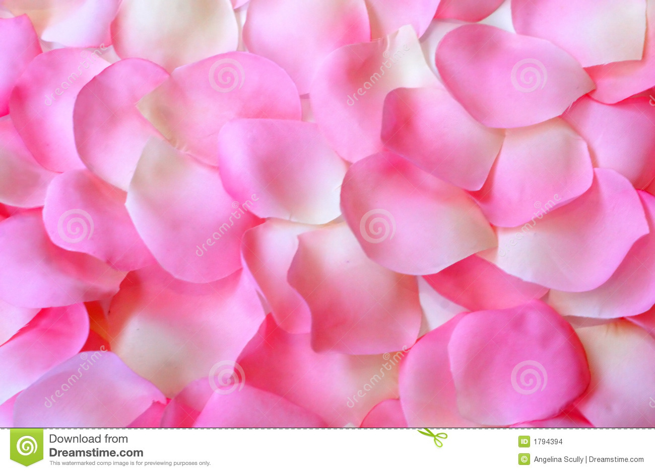 Pink and white rose petals arranged as a background.