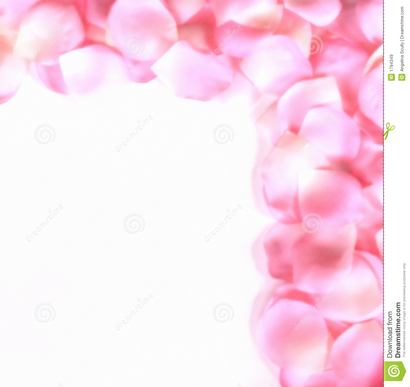 ... and white rose petals arranged in a border over a white background