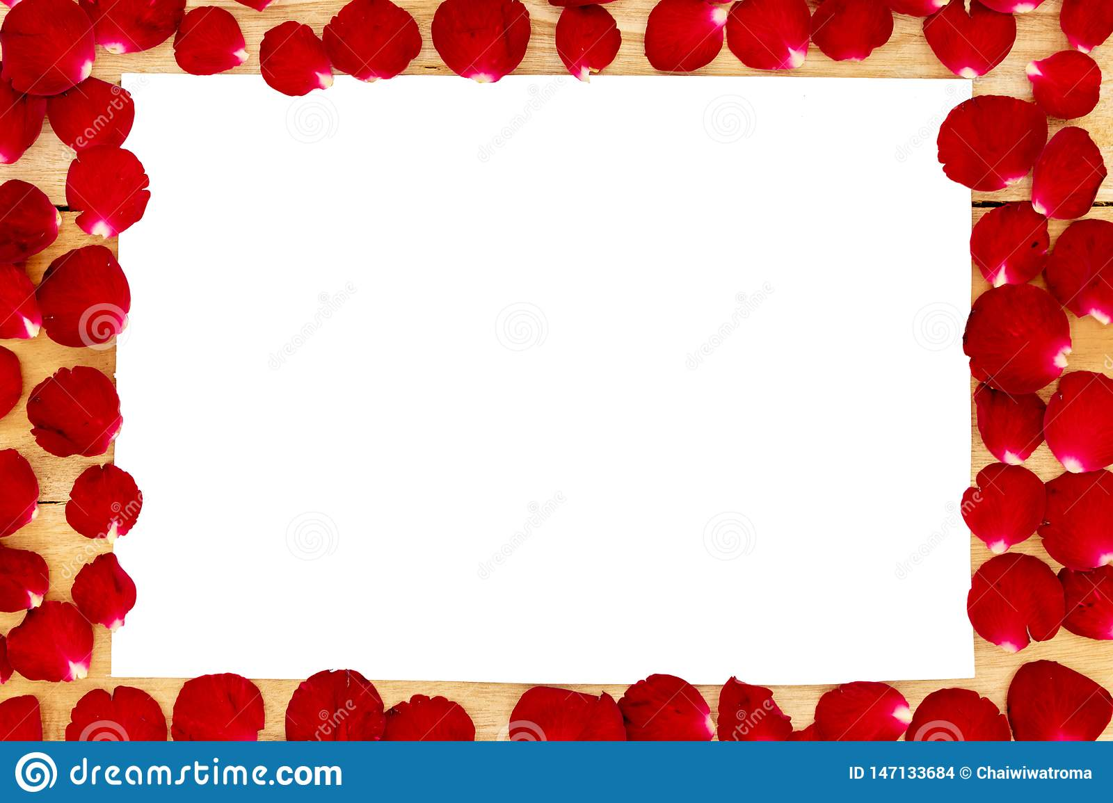 Rose petals arranged in a white frame