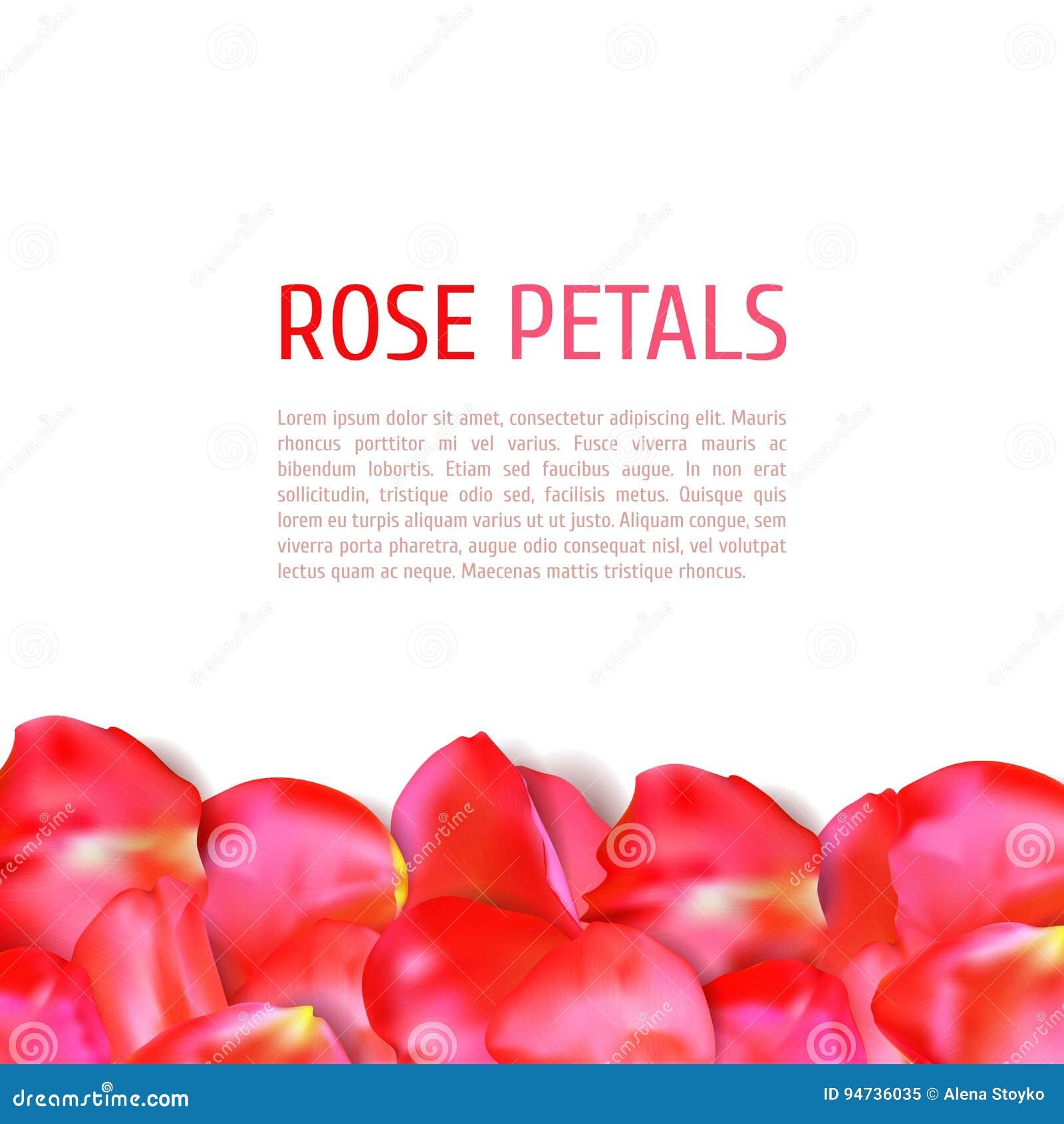 Rose petals border stock vector. Illustration of holiday - 94736035