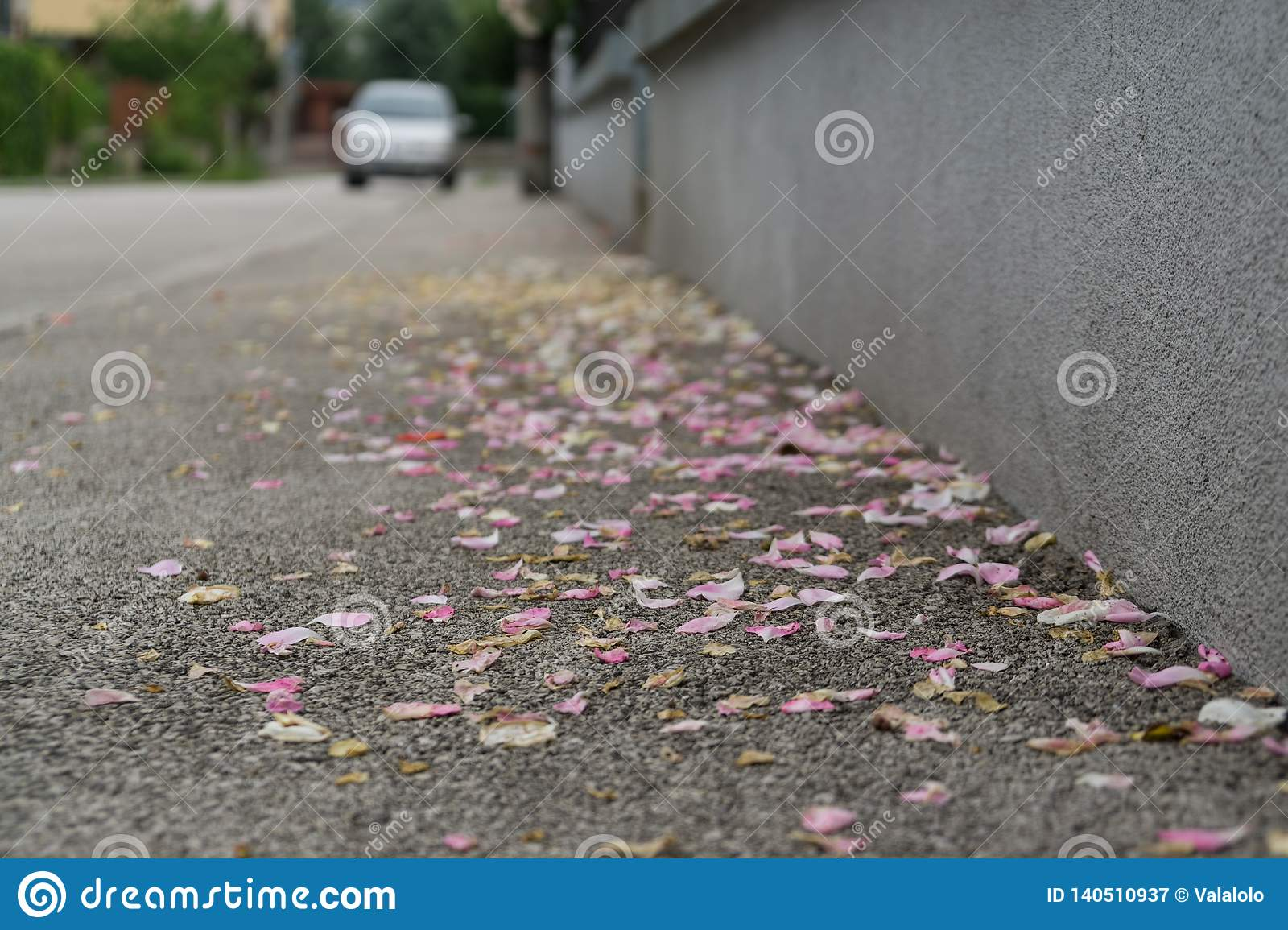 Rose petals on the road. Slovakia