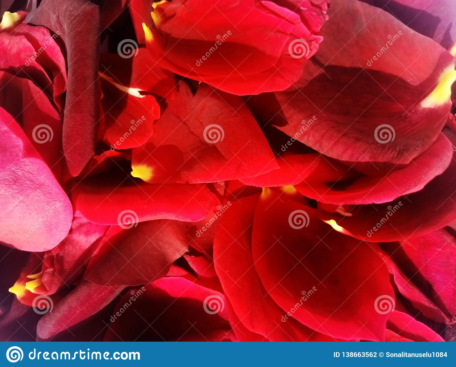 Rose rose petals with textured background.